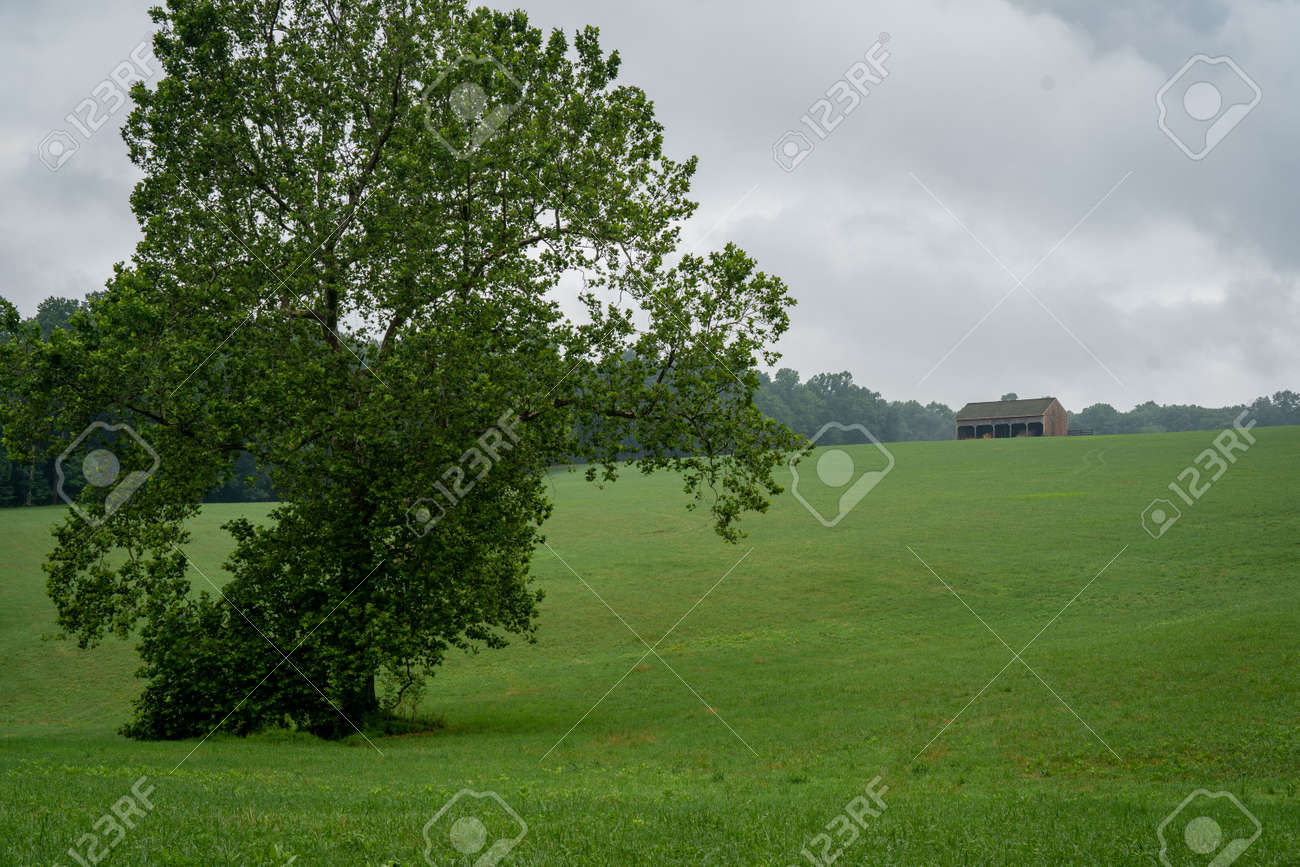A Lone Tree in Wide Open Field with a barn on the ridge in the background. - 171537438