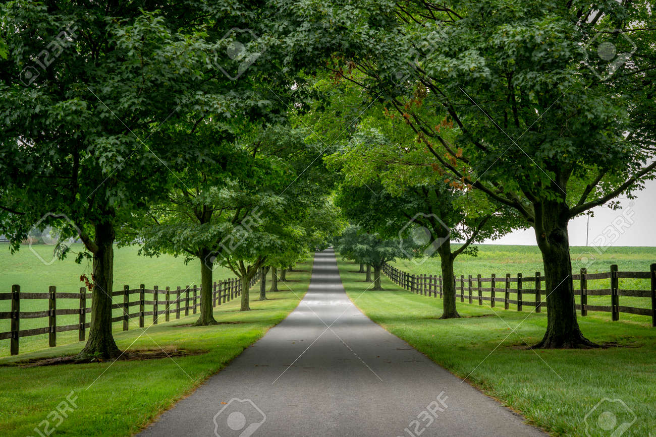 A paved road lined with trees on a cloudy summer day. - 171190194