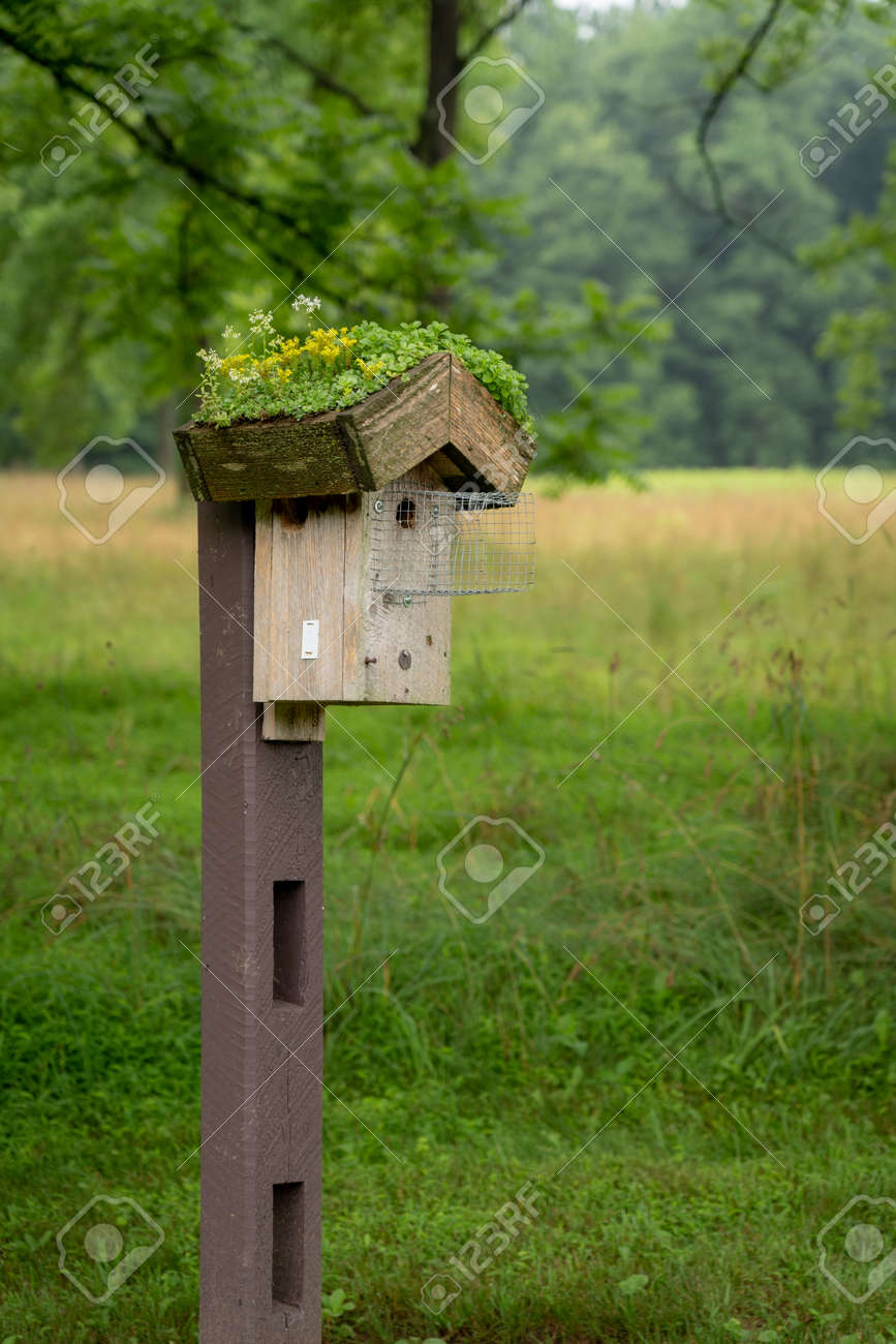 A tree swallow birdhouse on a post with flowers on the roof. - 171189912