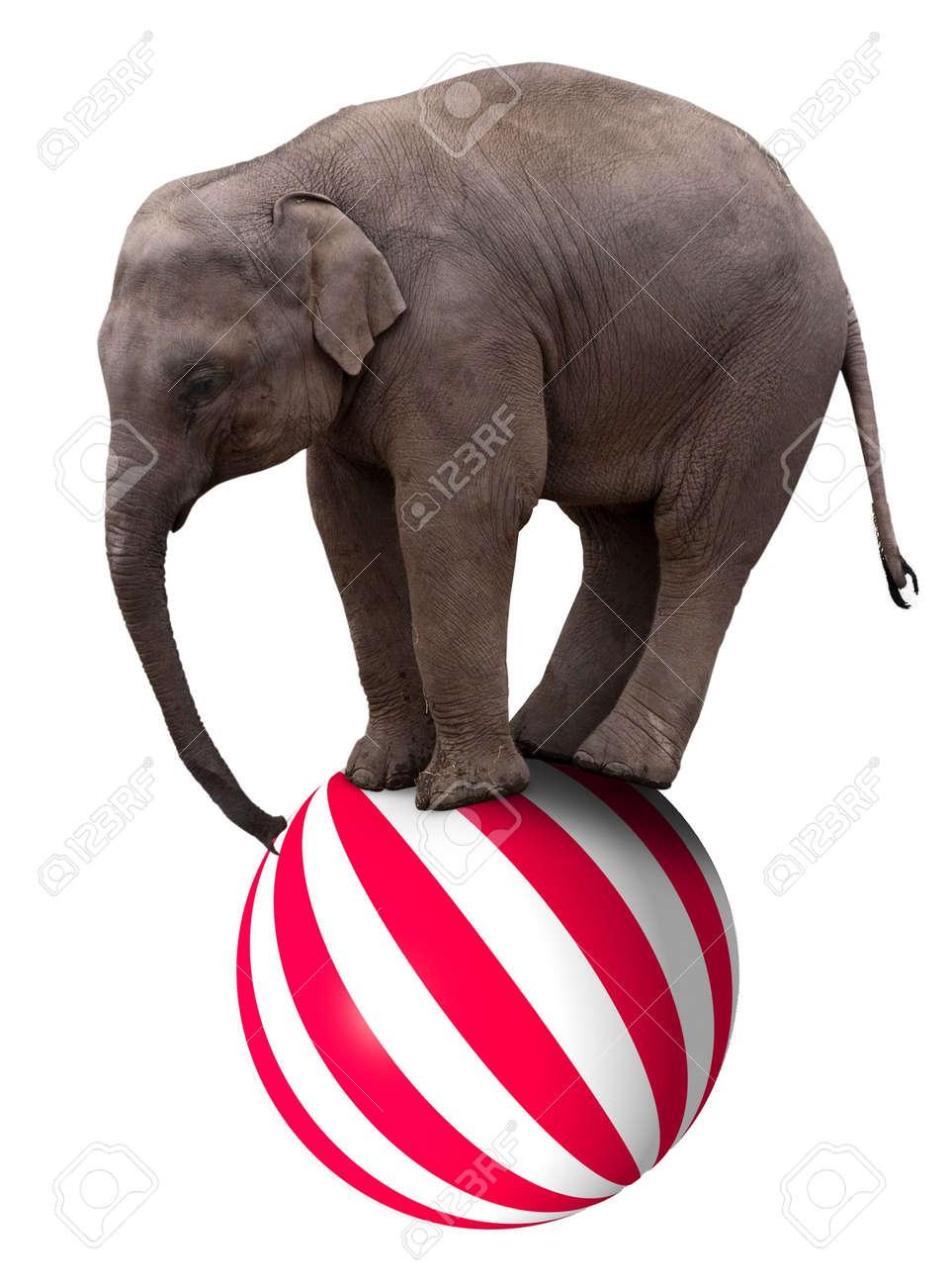 A baby circus elephant balancing on a big ball Stock Photo - 4088237