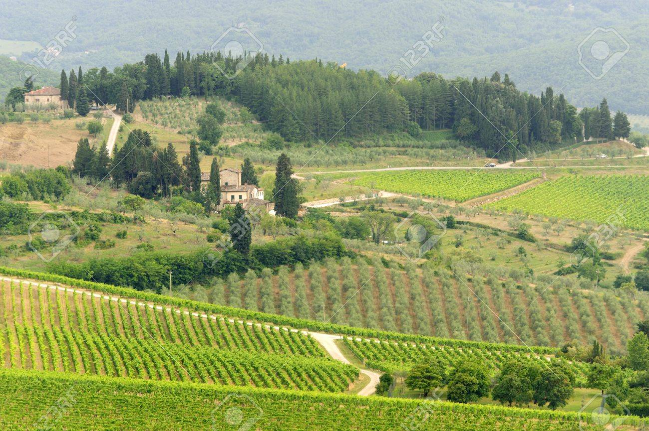 Hills of the Chianti region (Florence, Tuscany, Italy) with vineyards at summer Stock Photo - 11317863