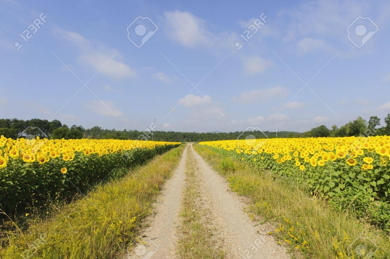 Summer Fields nude 943