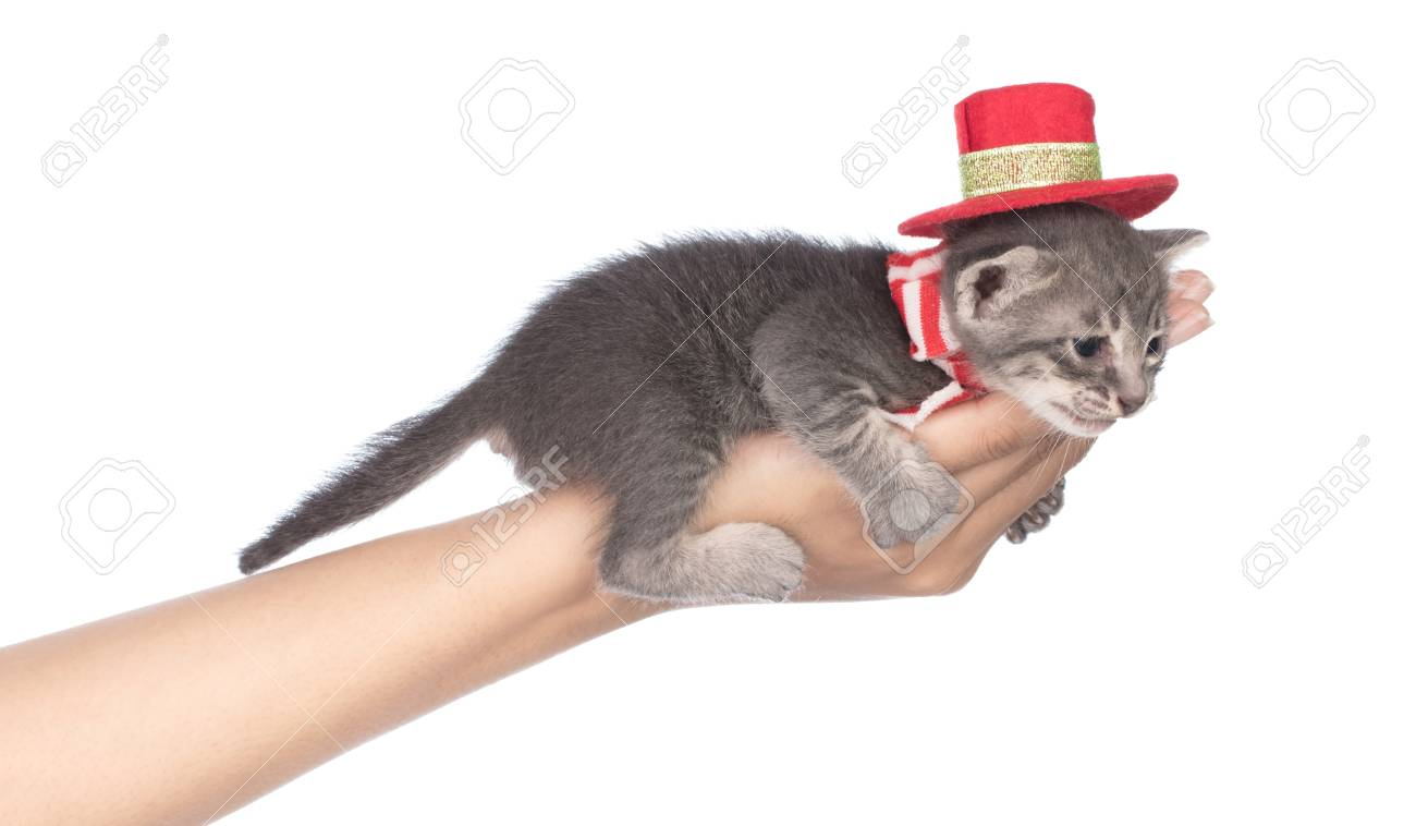 Hand Holding Baby Cat So Cute In Red Christmas Hat Isolated On