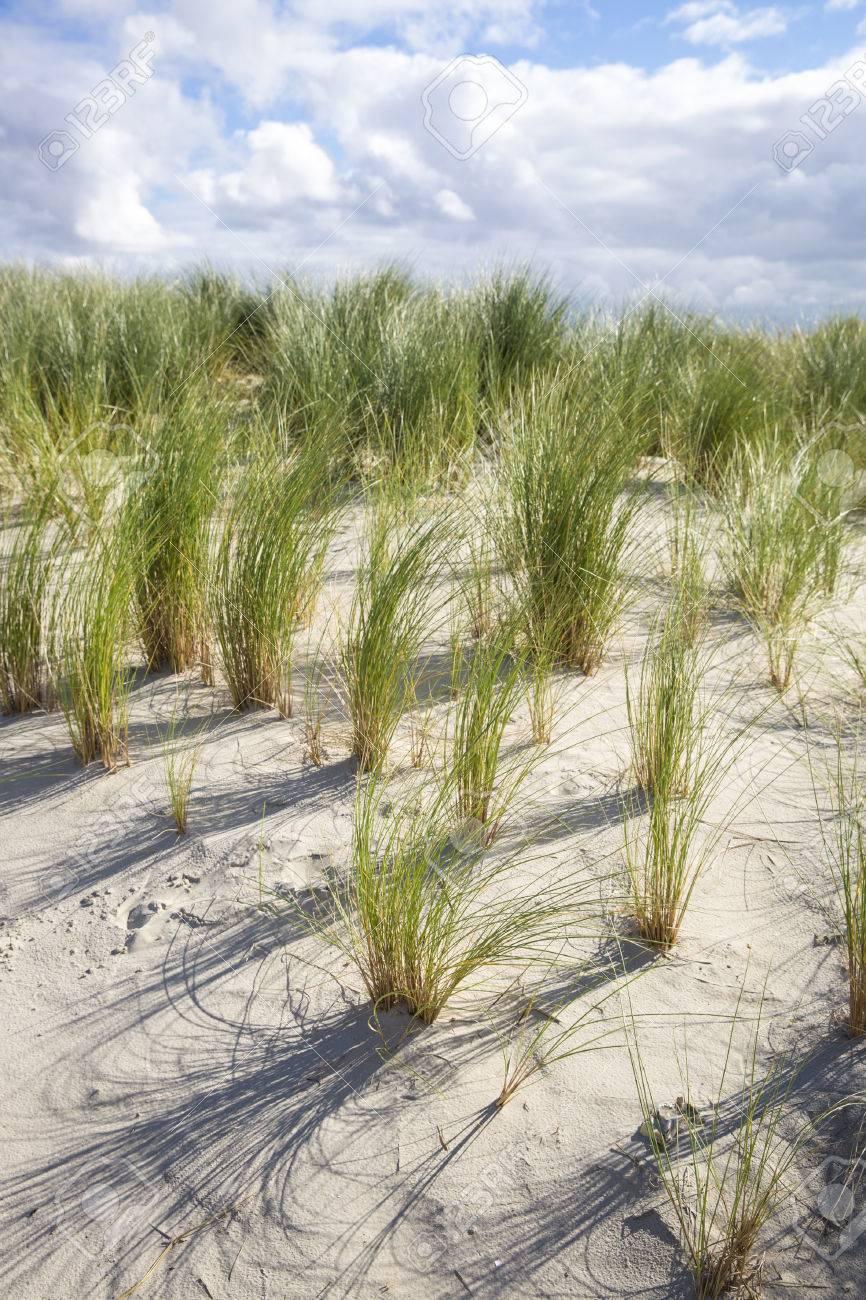 草のアーメラント島、オランダの...