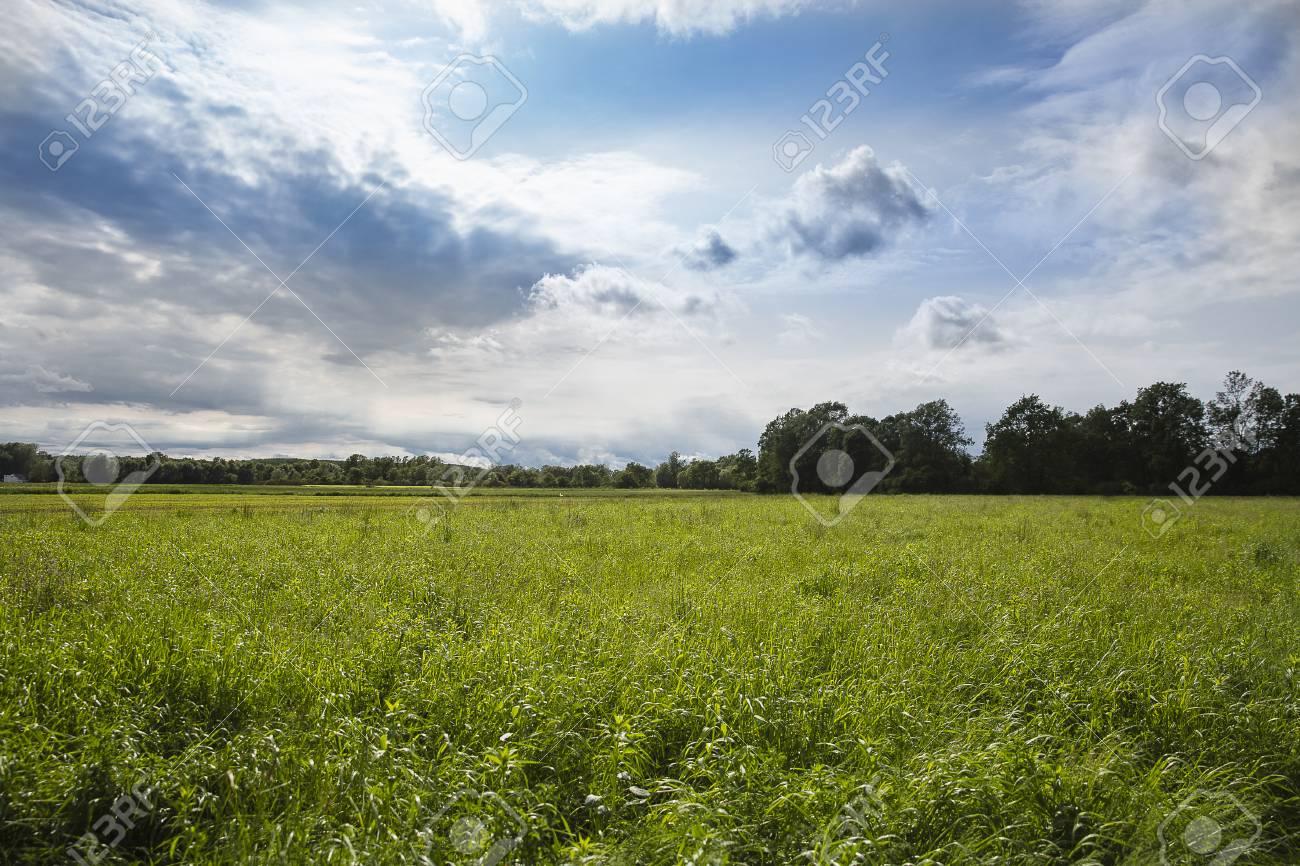 緑の草原、劇的な灰色の空、Lonjsko ポリエ クロアチア の写真素材 ...