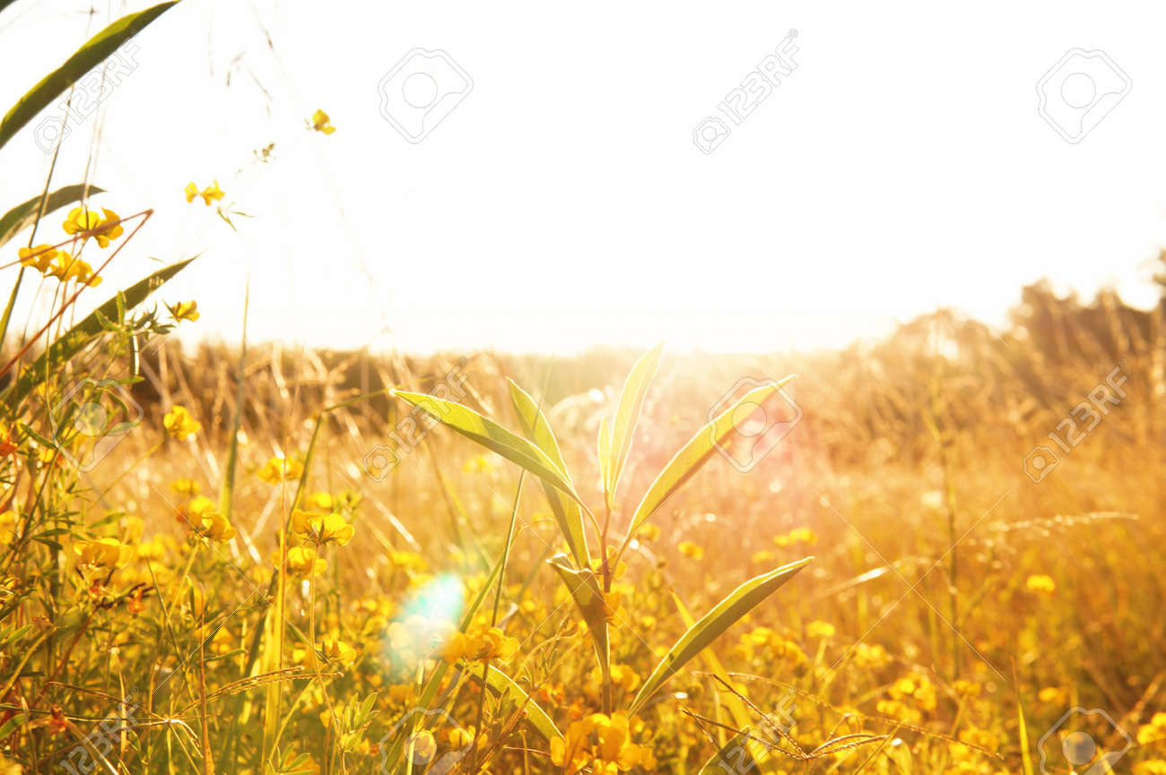 close up view of an area filled with little yellow flowers mixed with green grass areas - 156797838