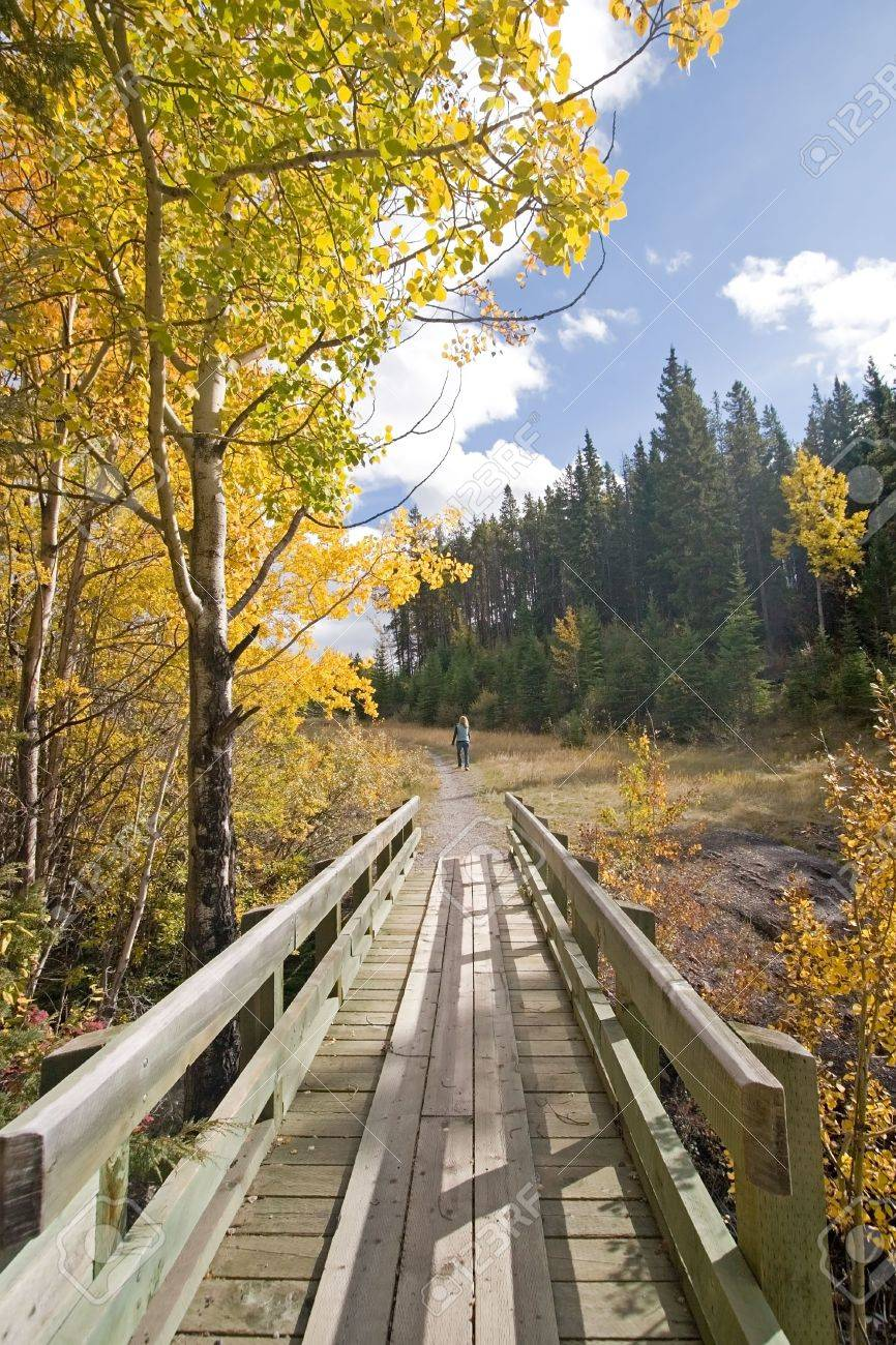 Colorful autumn leaves and beautiful fall outdoors nature landscapes of trees Stock Photo - 2531715