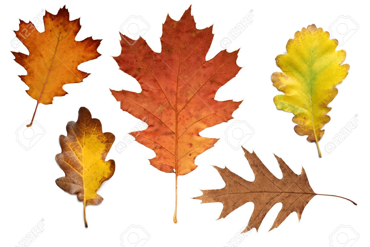 Autumn Leaf Images Stock Pictures Royalty Free Autumn Leaf