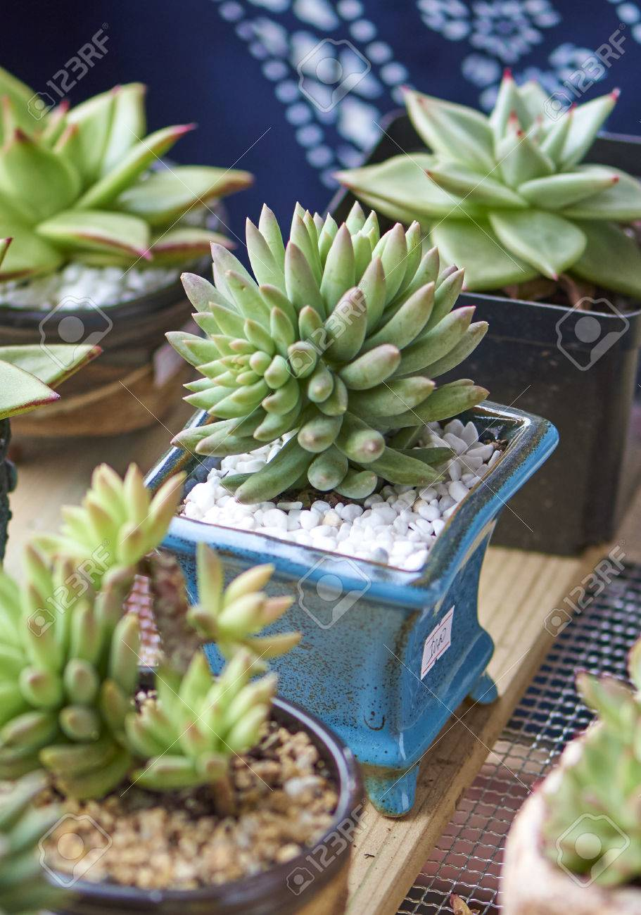 Wood frame succulents stock photo picture and royalty free image wood frame succulents stock photo 67861994 jeuxipadfo Image collections