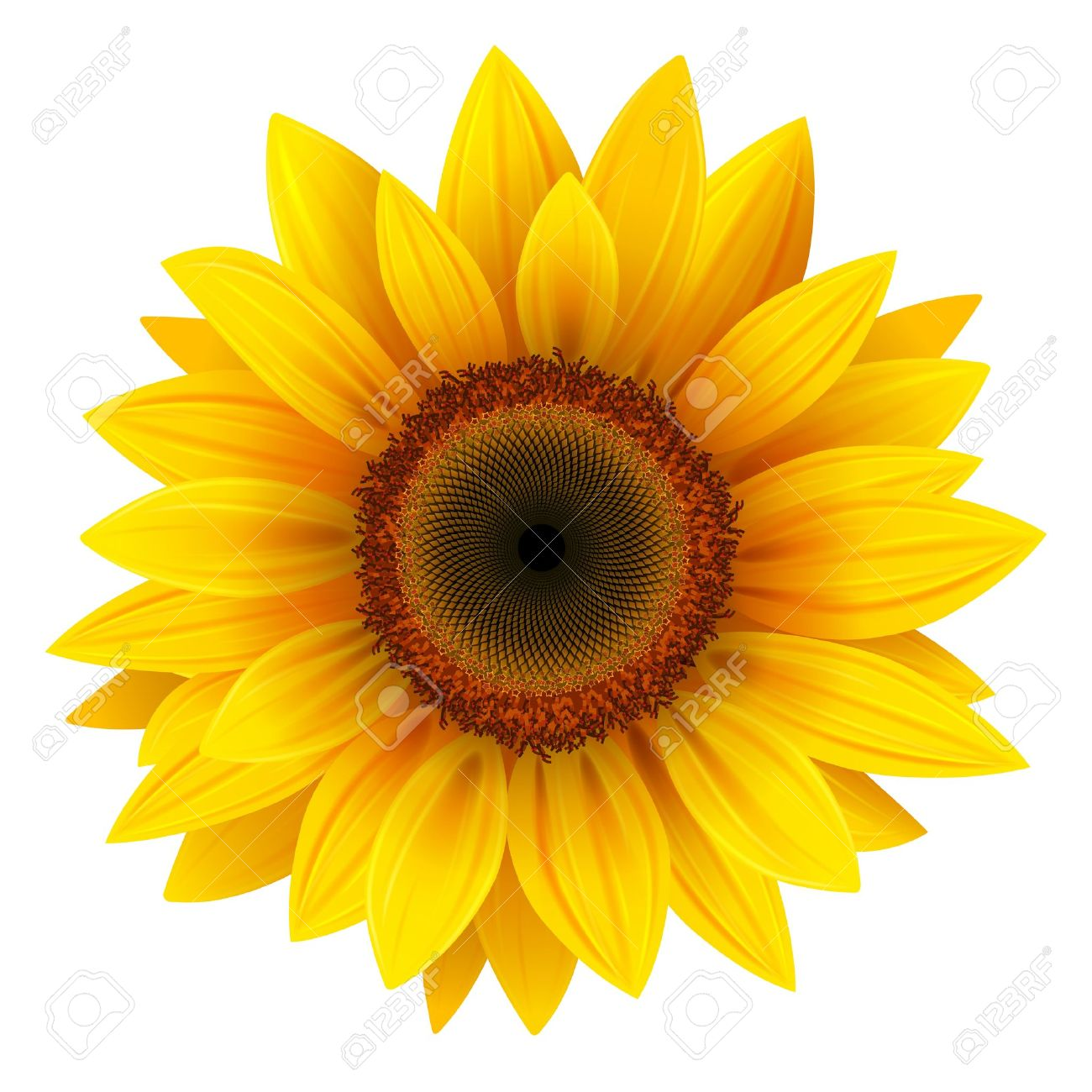31 978 sunflower cliparts stock vector and royalty free sunflower rh 123rf com sunflower clip art free images sunflower clipart images