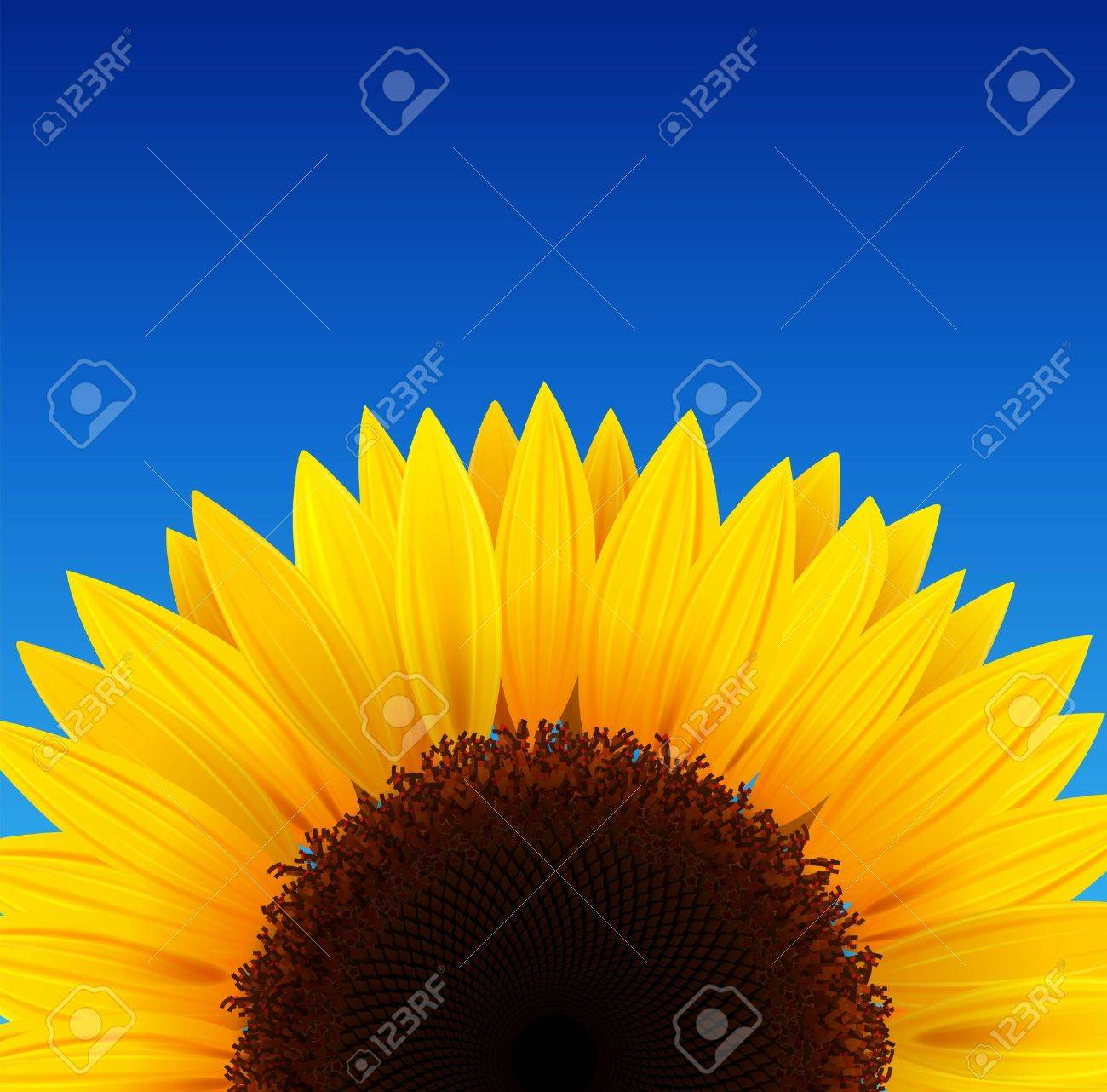 Sunflower background with blue sky. Stock Vector - 10058342