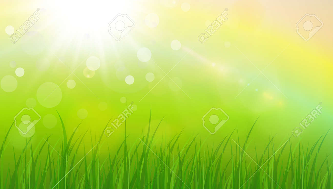 Sunny natural background, summer sun with green grass and blurry bokeh as fresh green spring background, nature vector illustration. - 166116022