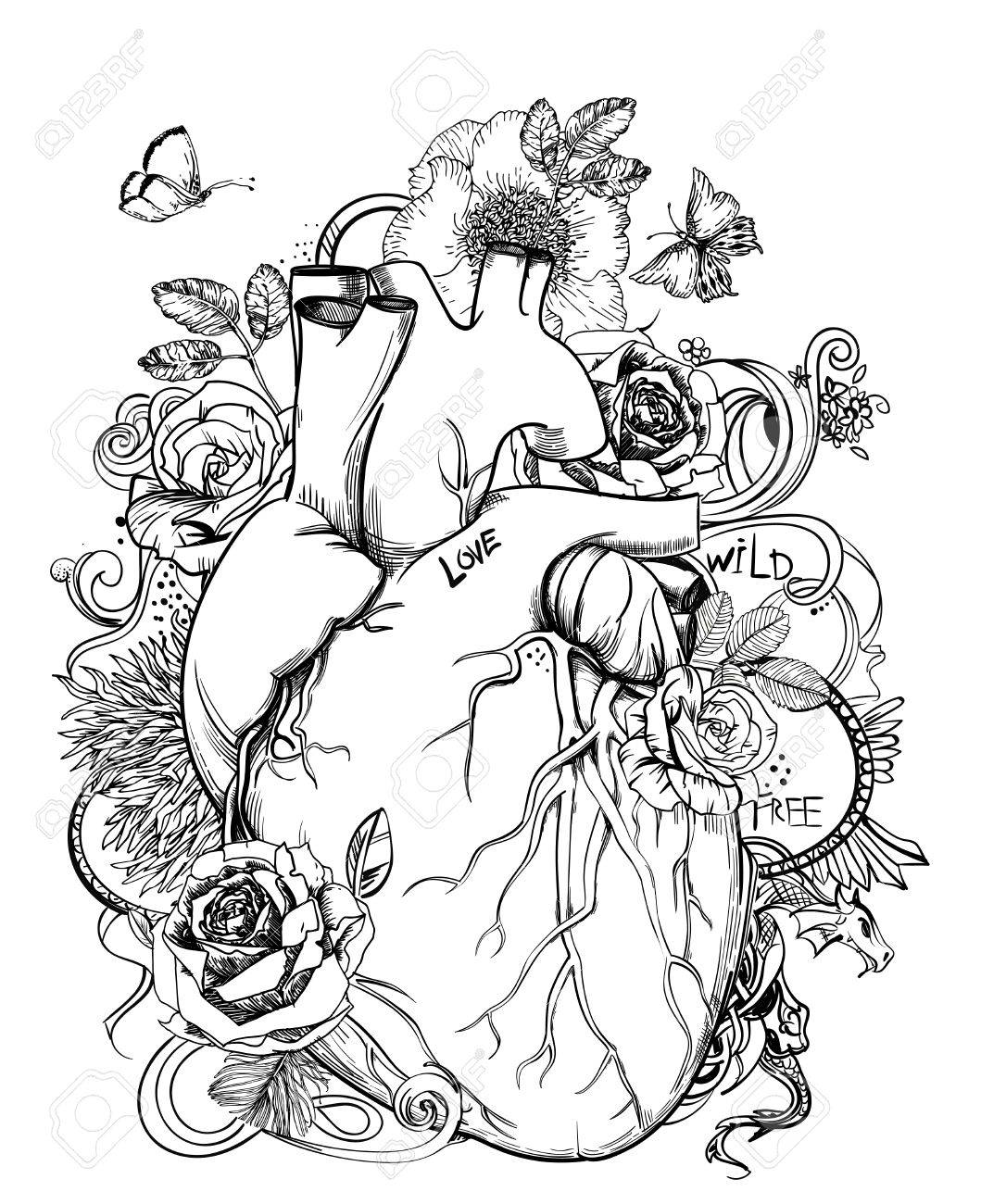 heart - anatomy picture with flowers Stock Vector - 71033421