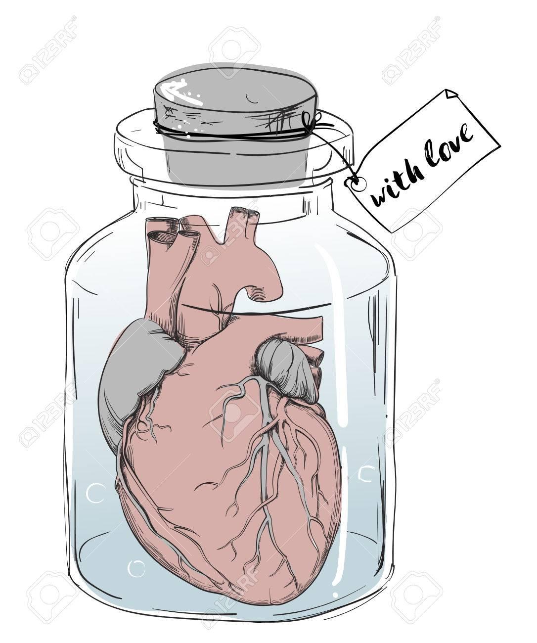 Corazón - Divertida Broma De La Anatomía Ilustraciones Vectoriales ...