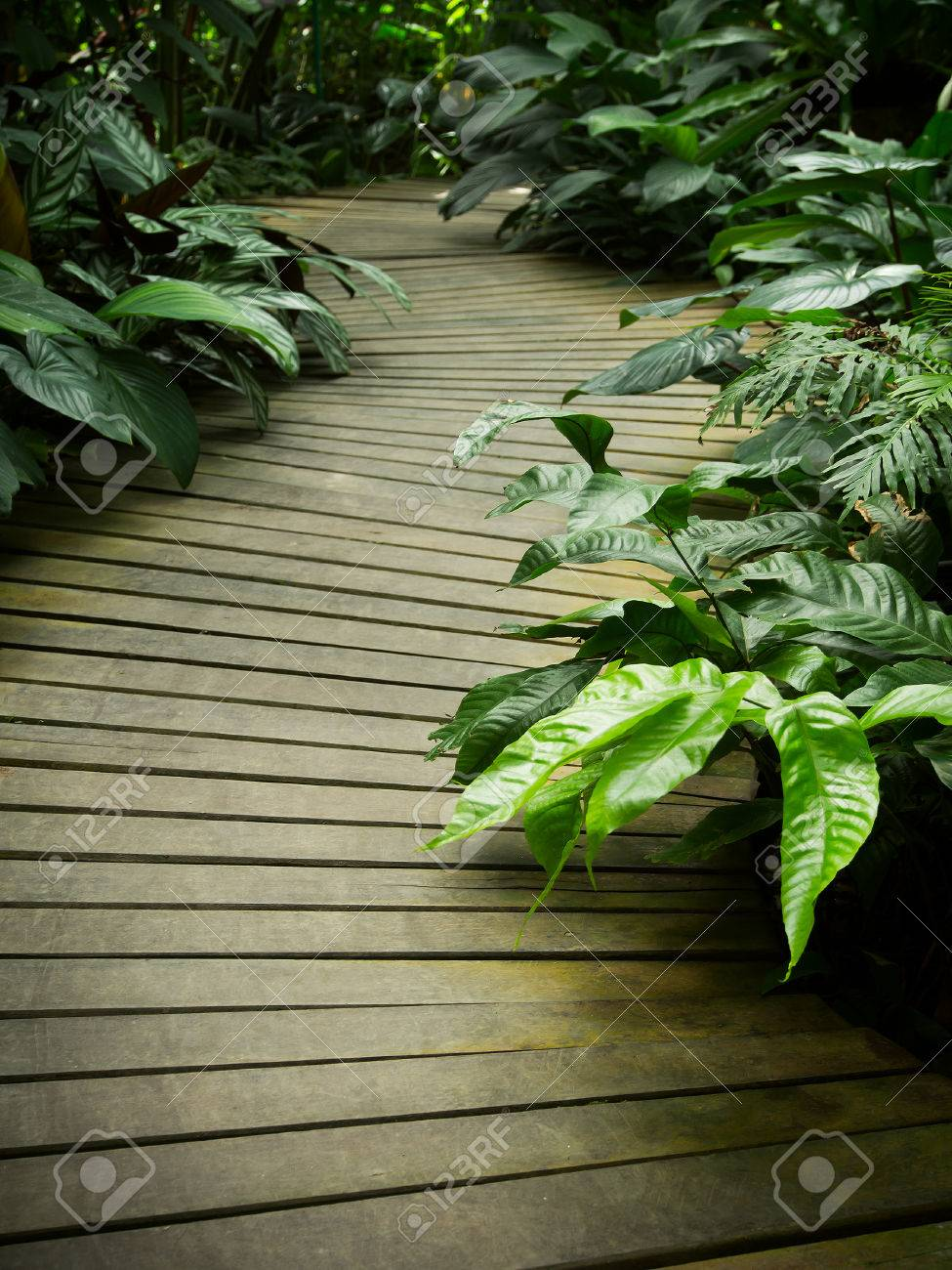 Stock Photo   Wood Path In Tropical Garden