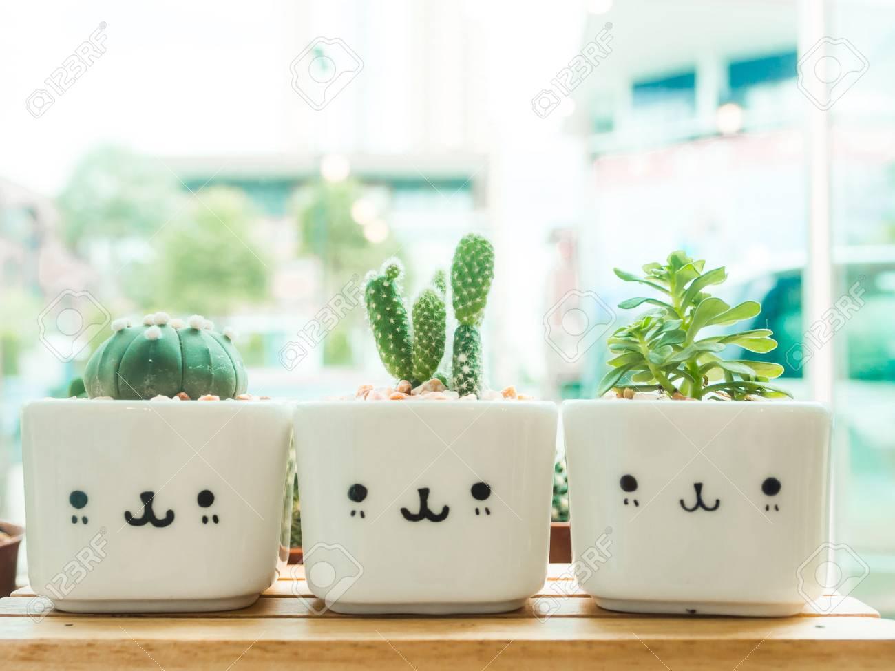Adorable Jardin De Cactus Interieur Banque D Images Et Photos