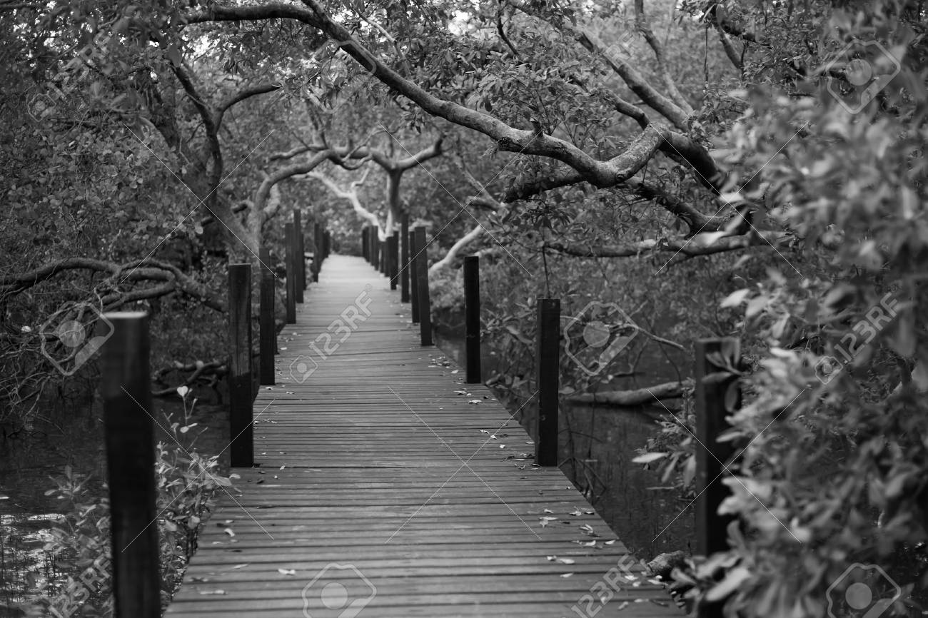 Wood path to deep forest bush black and white