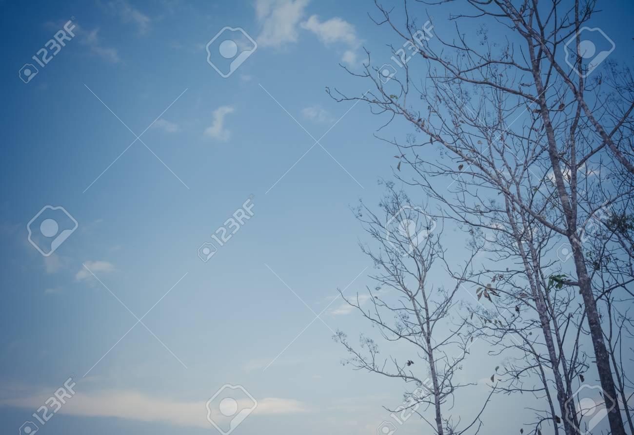 Vintage Tone Image Of Teak Forest On Daytime For Background. Stock ...