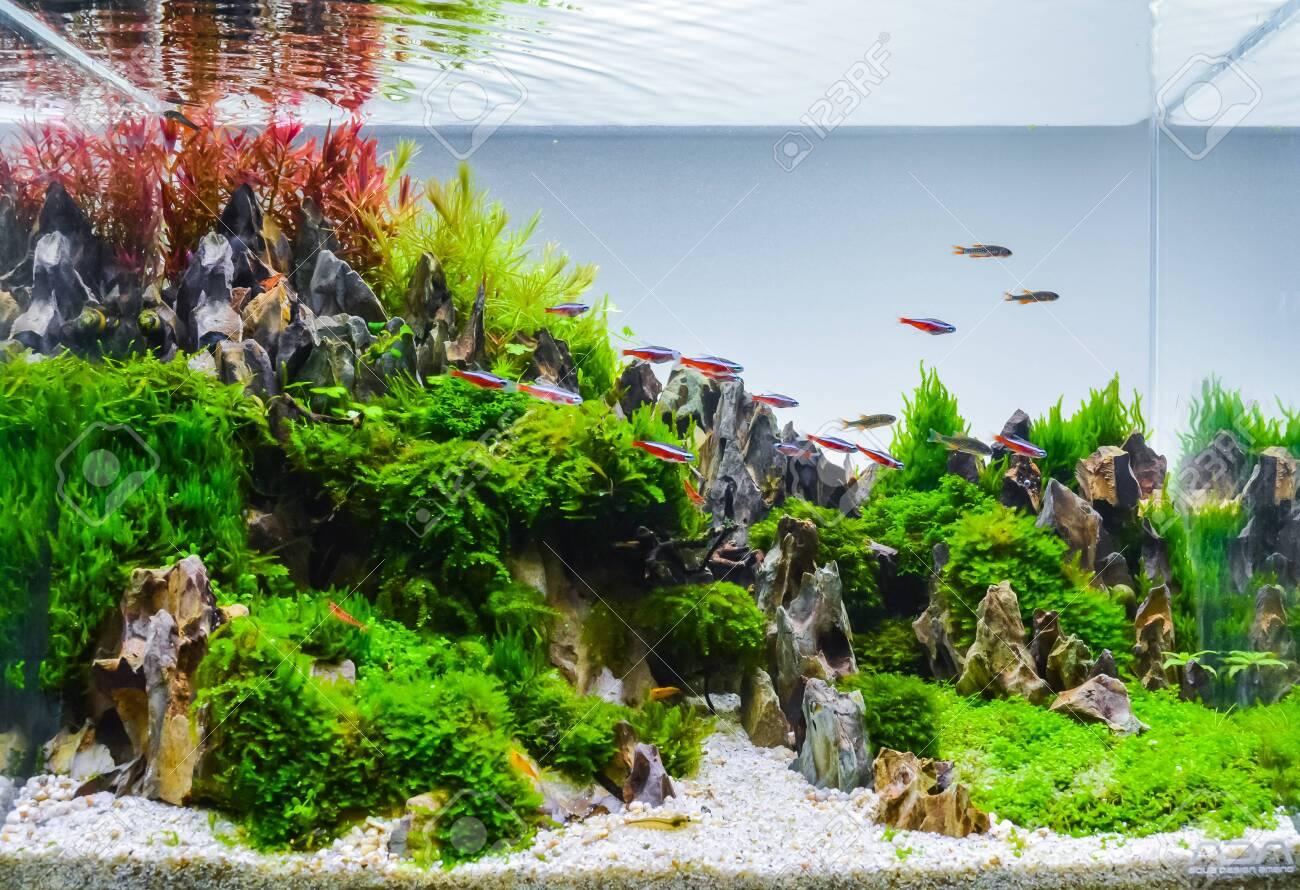 close up image of underwater landscape nature style aquarium
