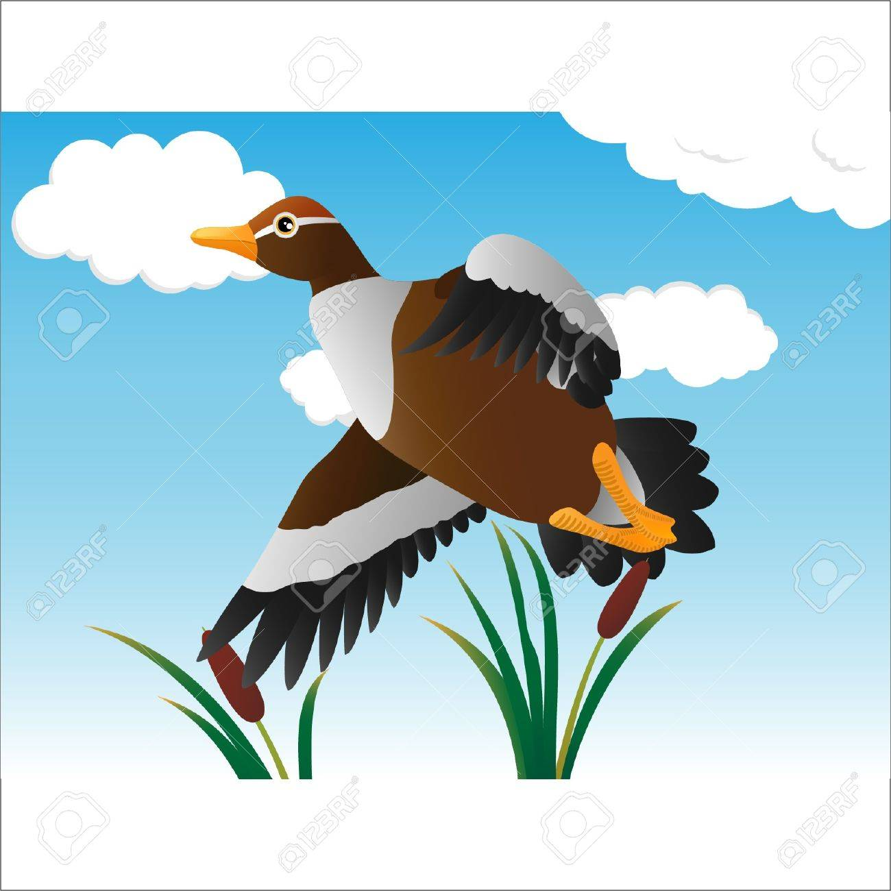 a flying duck in the swamp Stock Vector - 13074176