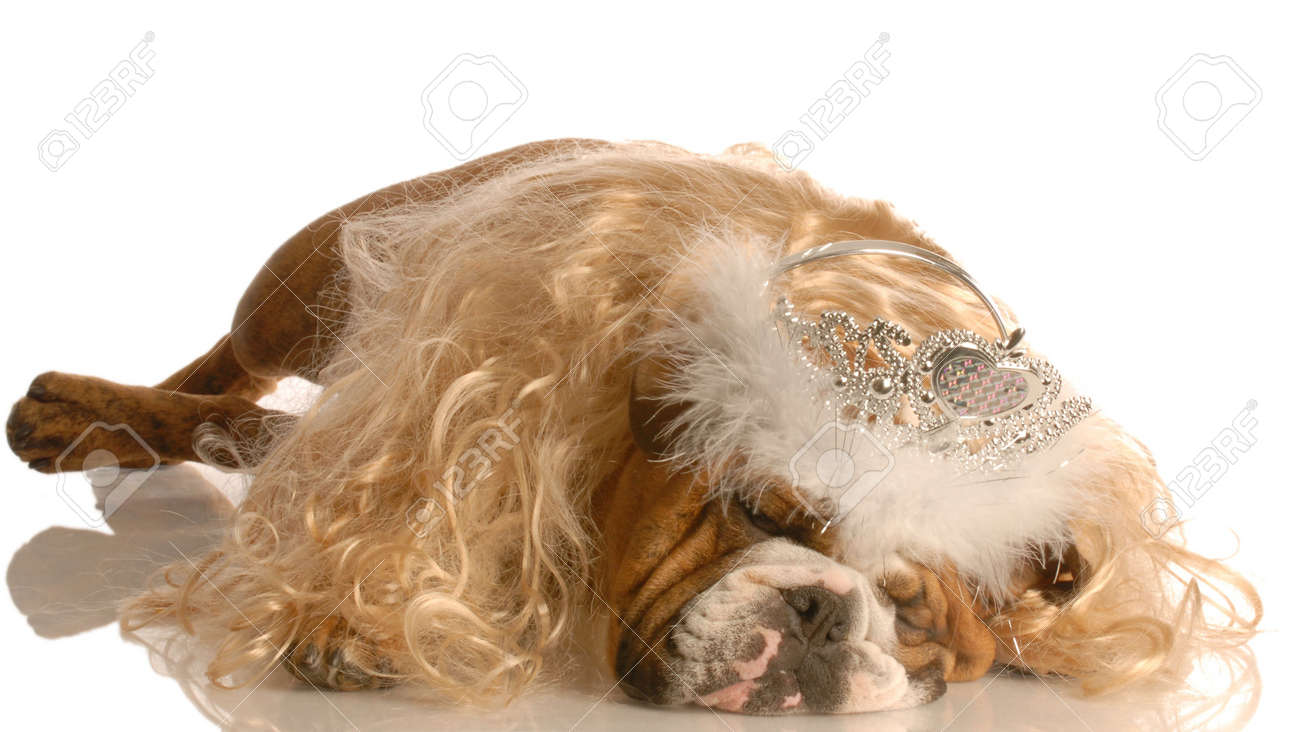 funny english bulldog dressed up as a princess with blond wig and tiara Stock Photo - 3934929