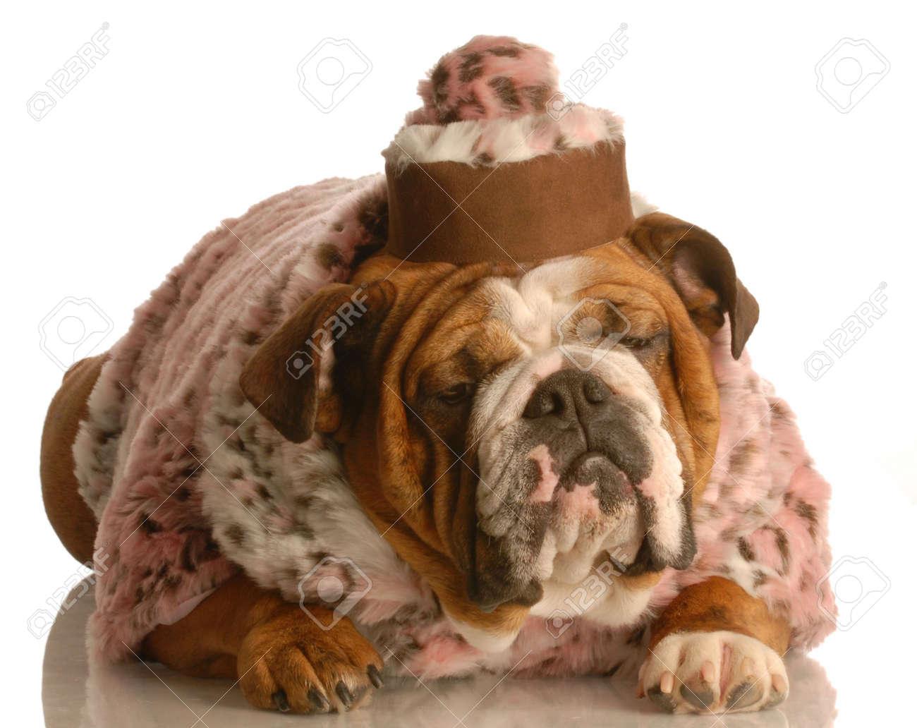 Mantel fur old english bulldog