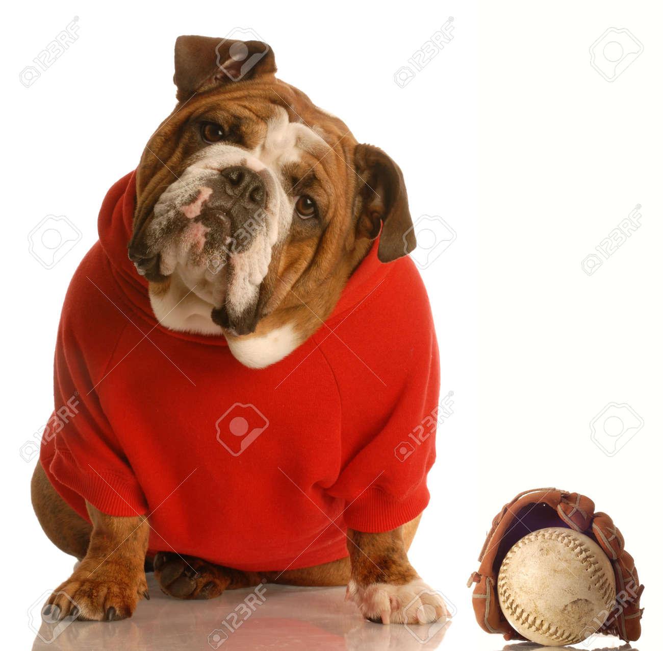 sports hound - english bulldog with baseball and glove Stock Photo - 4453262