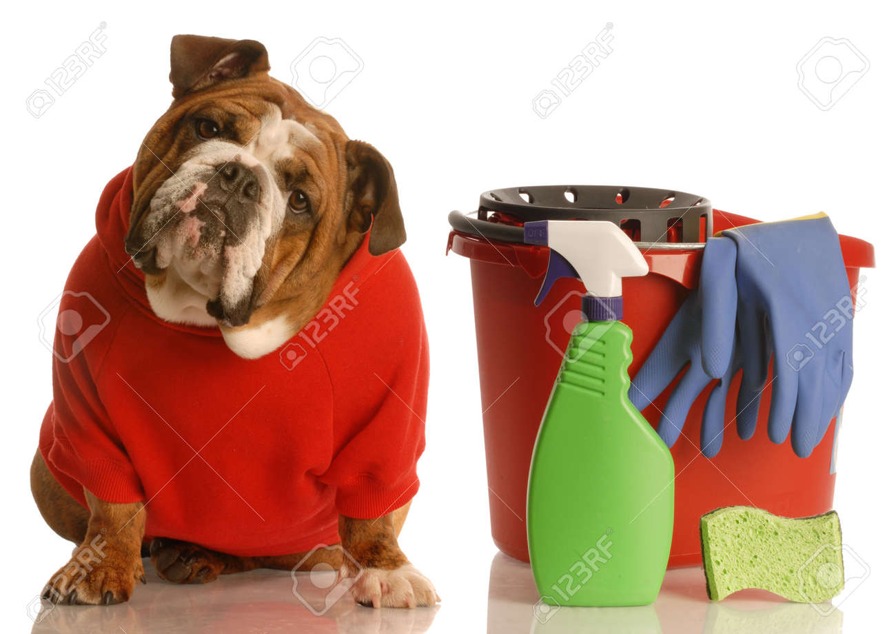 House Training A Puppy English Bulldog Sitting Beside Bucket Stock Photo Picture And Royalty Free Image Image 4502538