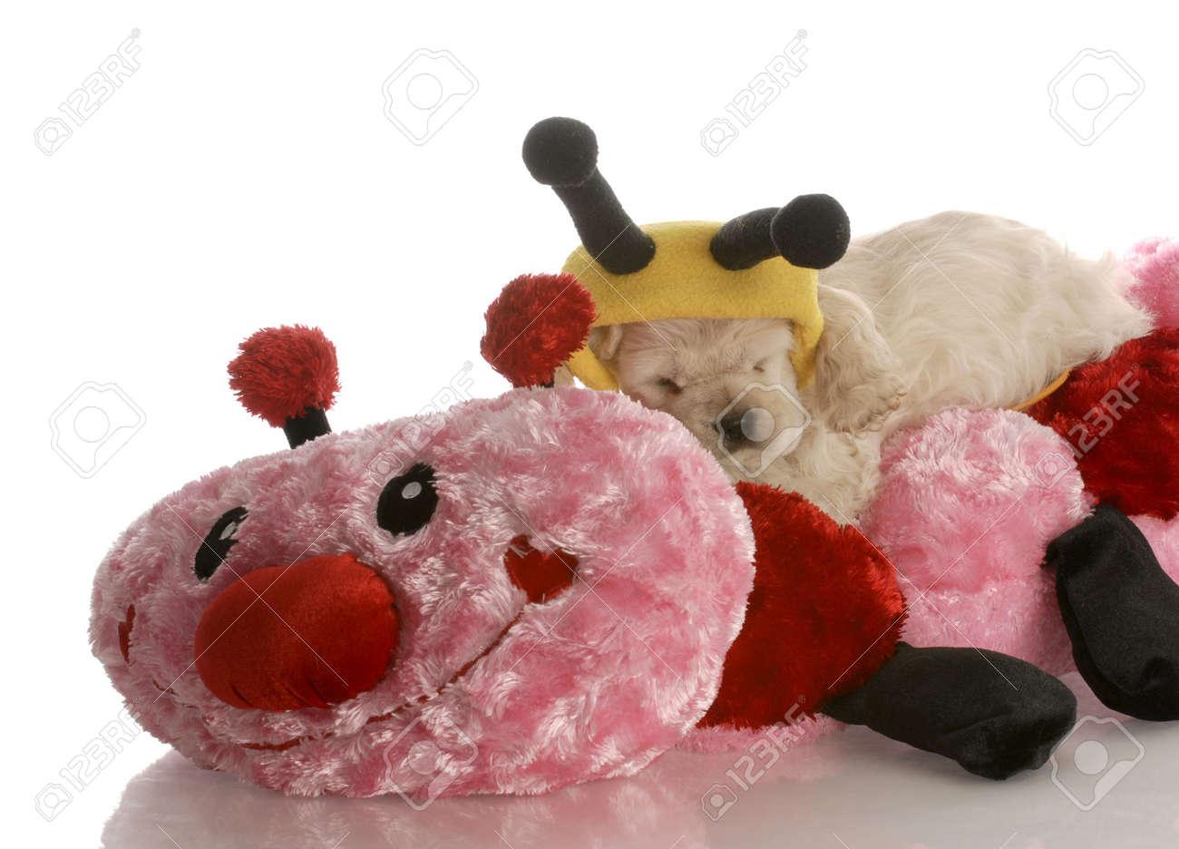 American Cocker Spaniel Puppy Sleeping On Stuffed Animal Stock Photo