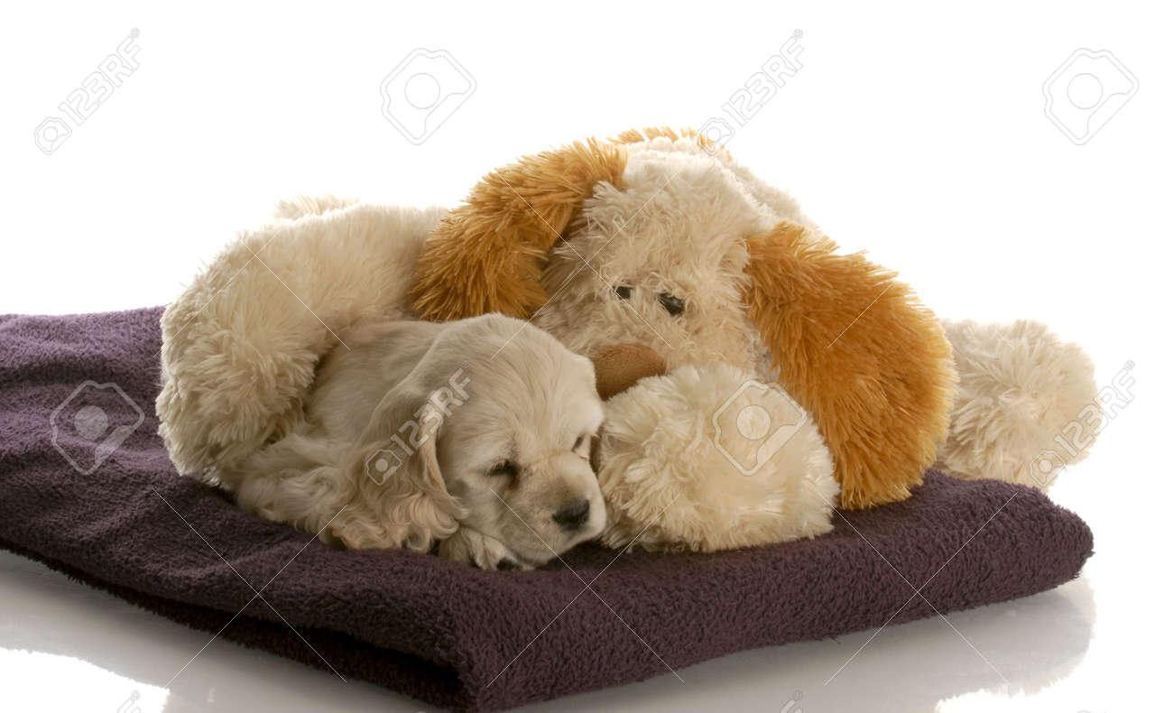 Spaniel Stuffed Animal Spaniel Puppy And Stuffed