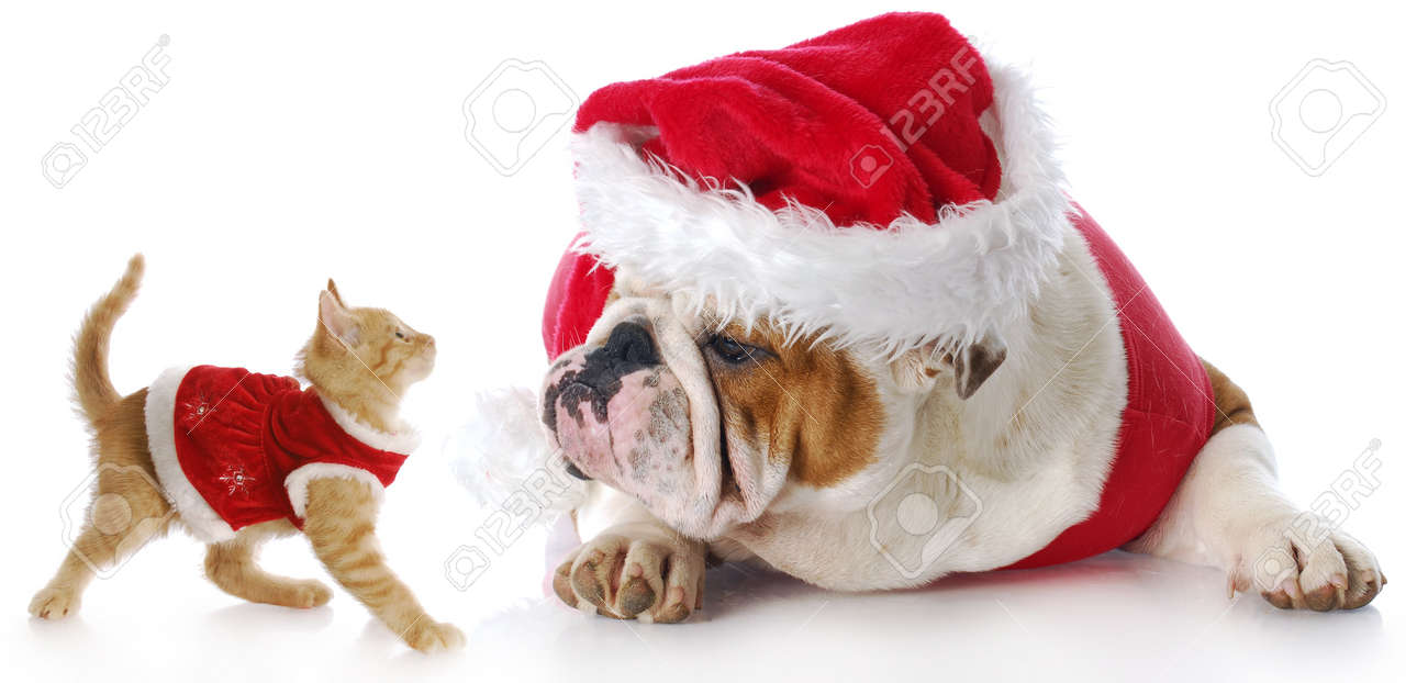adorable cat and dog dressed up for christmas with reflection