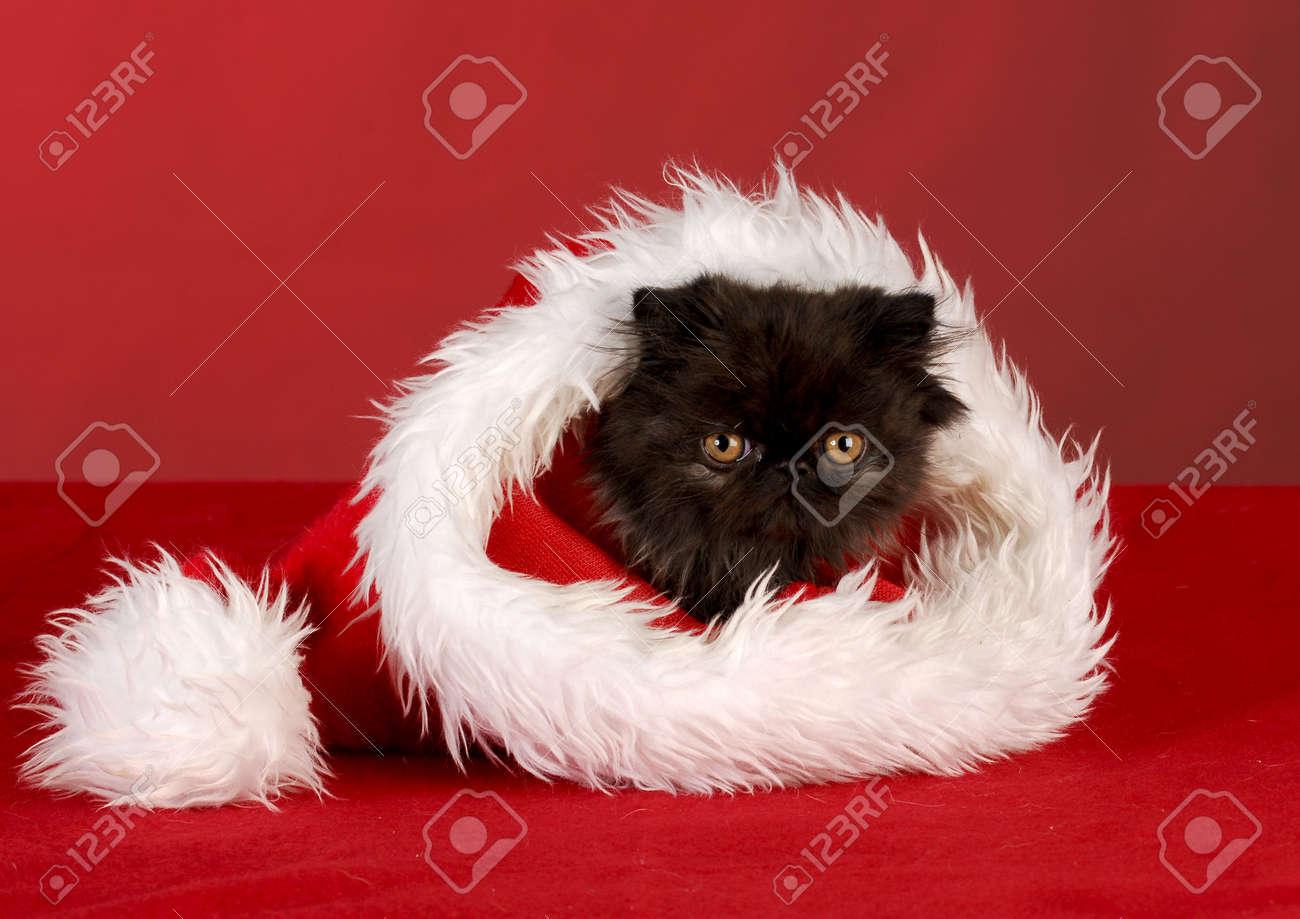 persian kitten sitting inside santa hat on red background Stock Photo - 8110951