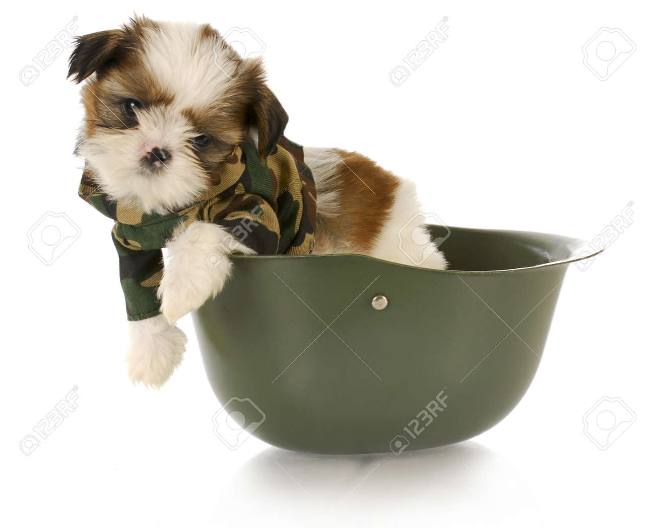Good Soldier Army Adorable Dog - 8377668-adorable-shih-tzu-puppy-wearing-camouflage-sitting-in-army-helmet  Perfect Image Reference_294610  .jpg