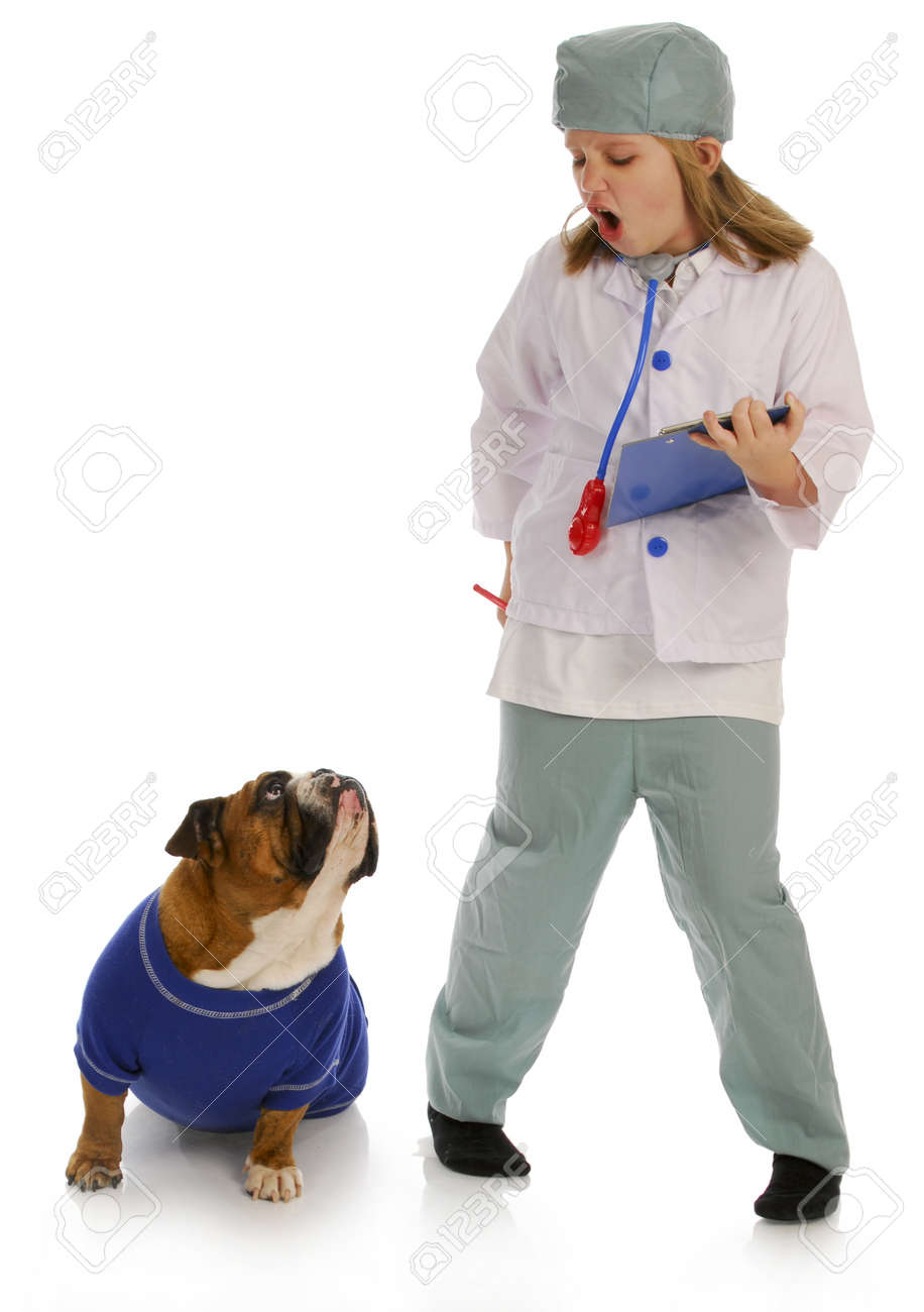 veterinary care - girl dressed up like vet giving advise to english bulldog on white background Stock Photo - 8512376
