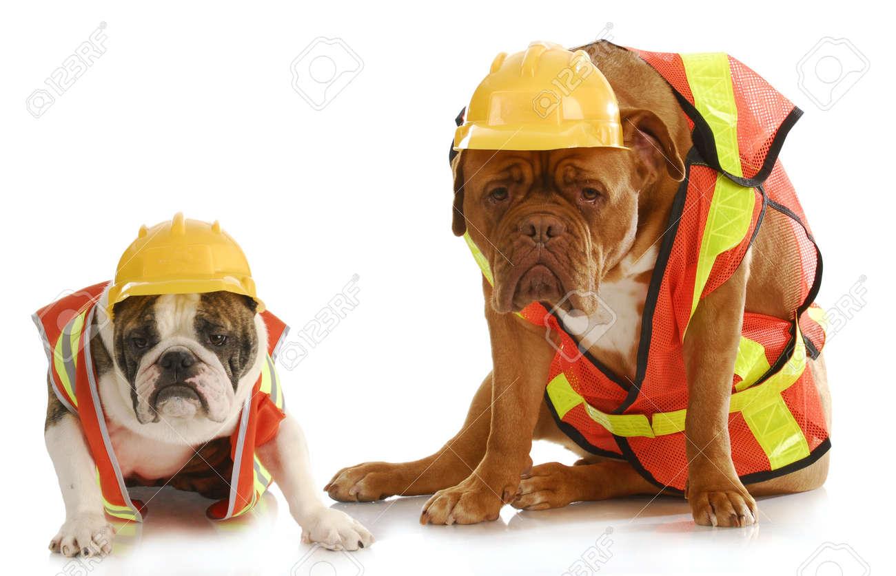 Arbeitshunde Englisch Bulldog Und Bordeauxdogge Gekleidet Wie Sehr
