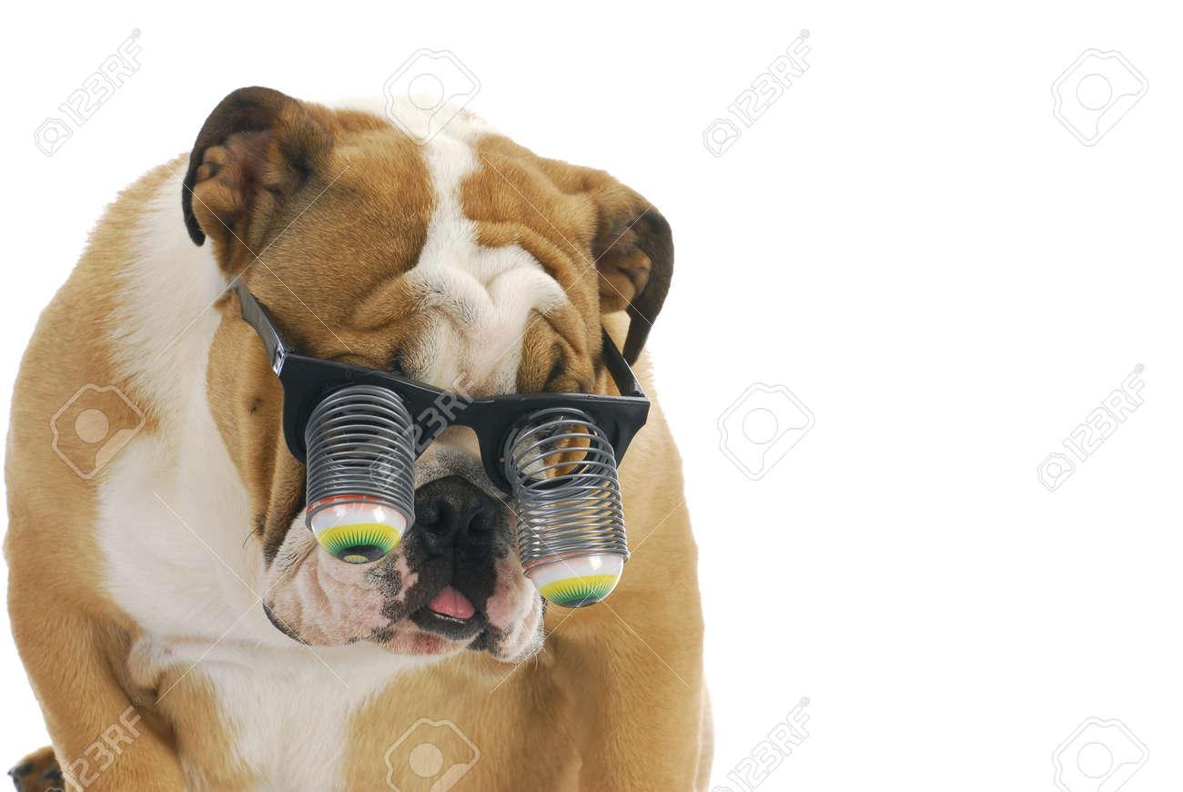funny dog wearing glasses - english bulldog wearing silly google