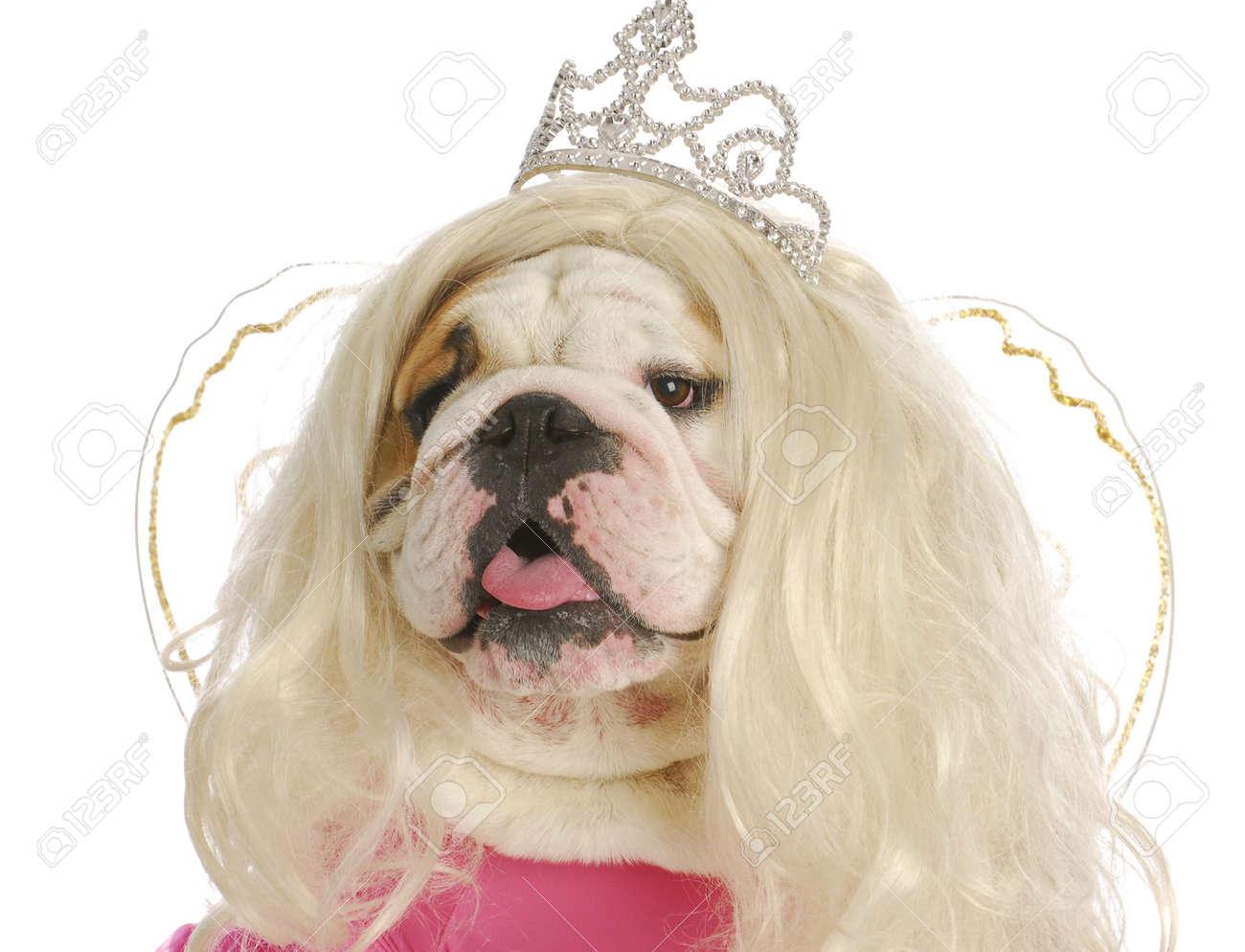 ugly princess - english bulldog wearing wig and princess costume on white background Stock Photo - 10815069