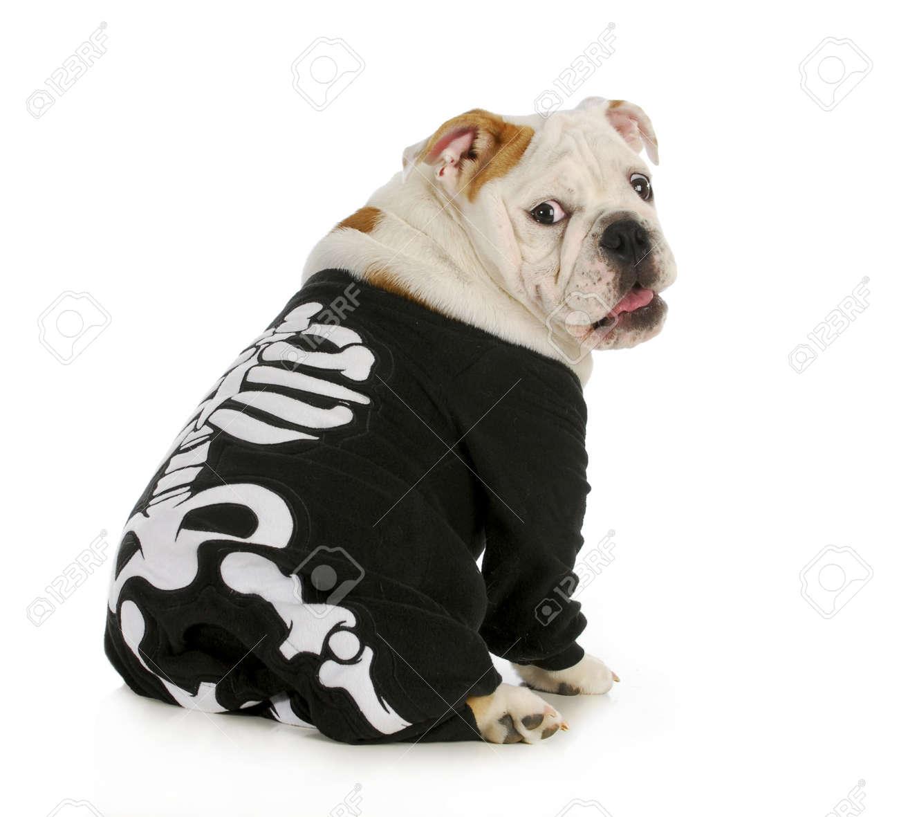 Perro Esqueleto - Inglés Bulldog Llevar Traje De Esqueleto Con ...