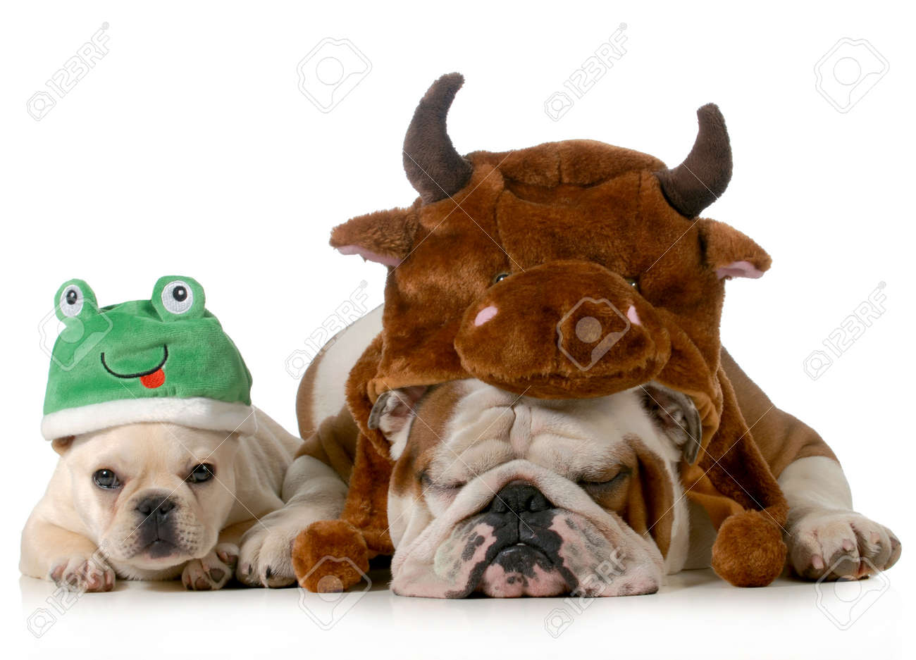 Halloween Frog Stock Photos & Pictures. Royalty Free Halloween ...