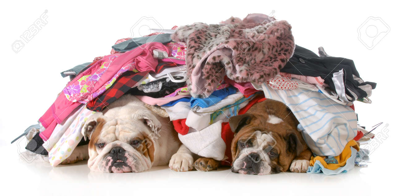 lots of dogs images u0026 stock pictures royalty free lots of dogs