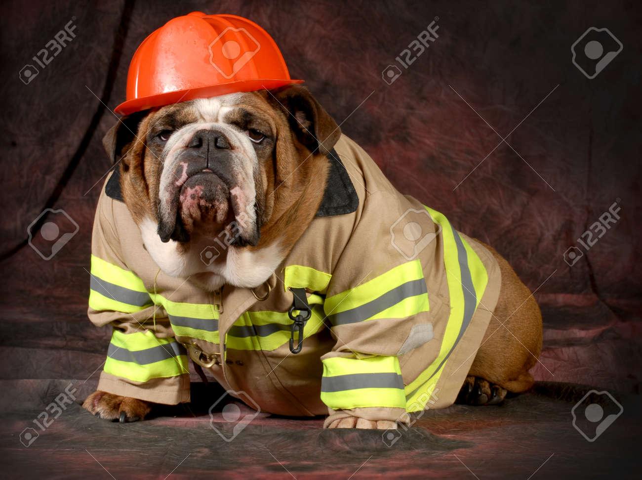 Feuerwehrhaus Hund Englisch Bulldogge Tragen Feuerwehrmann Kostüm