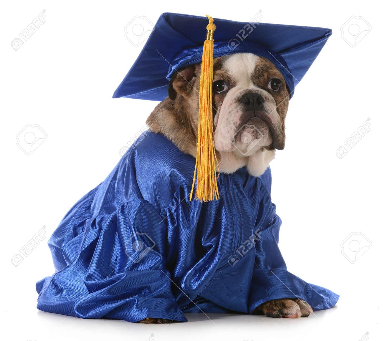 Puppy School English Bulldog Wearing Graduation Hat And Gown