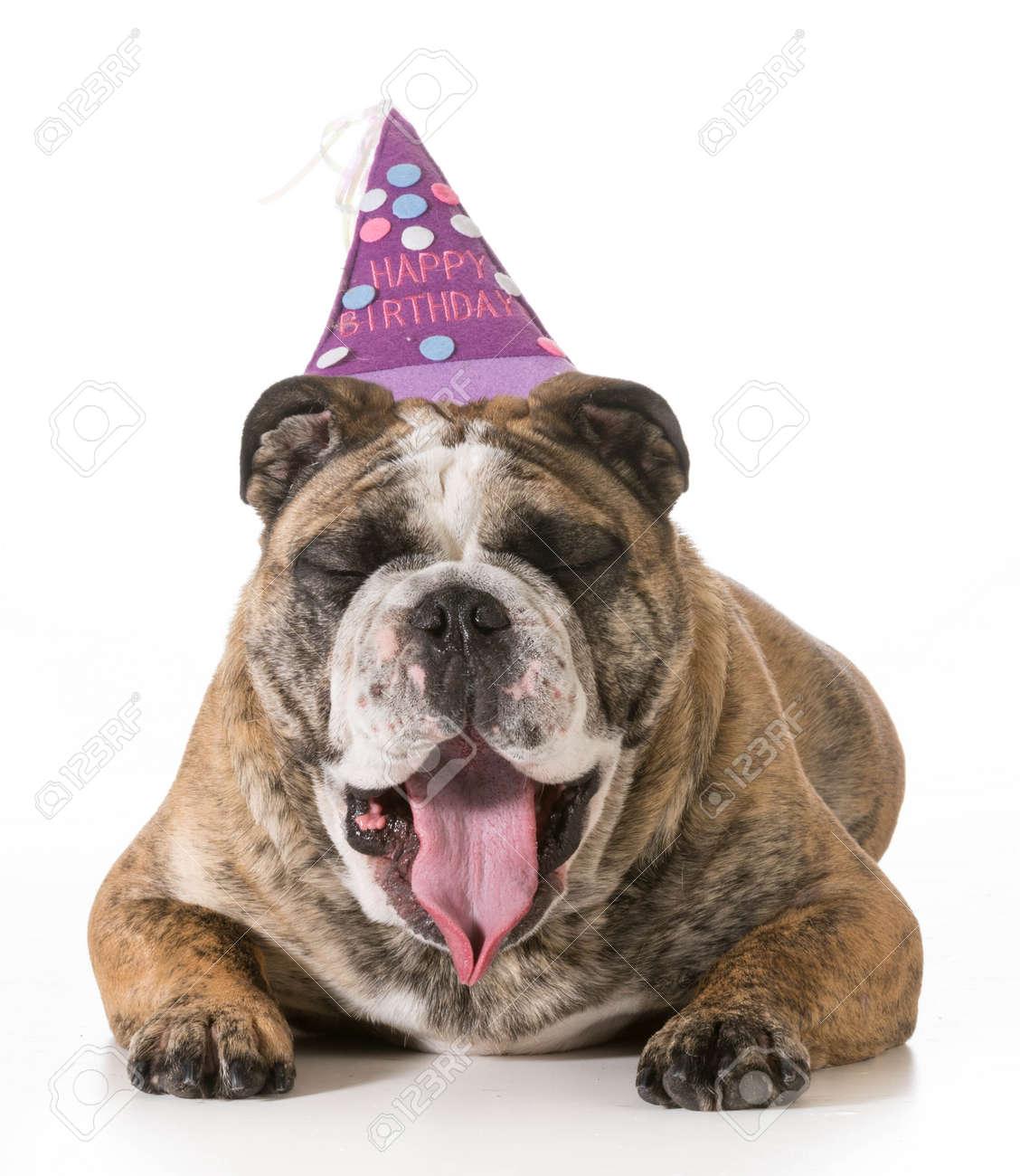 Geburtstag Hund Englisch Bulldogge Gahnen Tragt Happy Birthday Hut