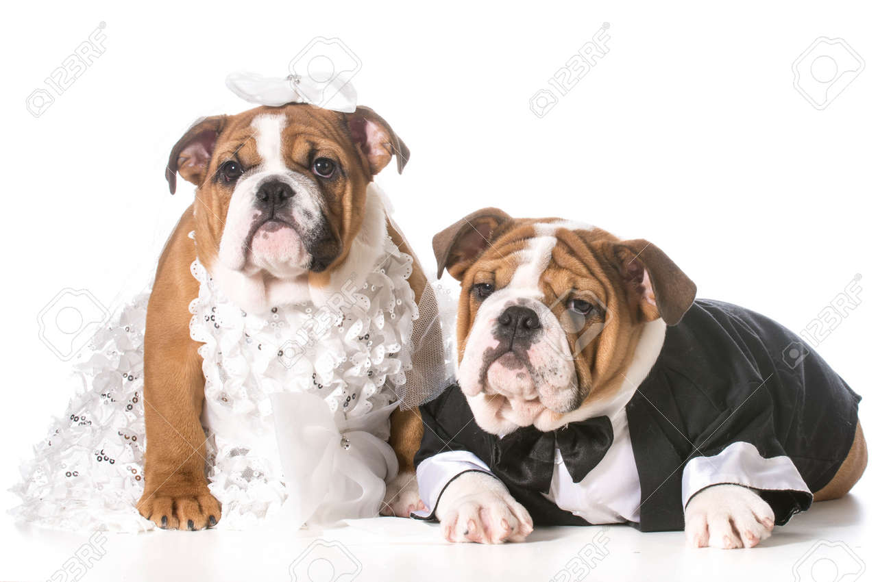 dog bride and groom puppies - 35220397