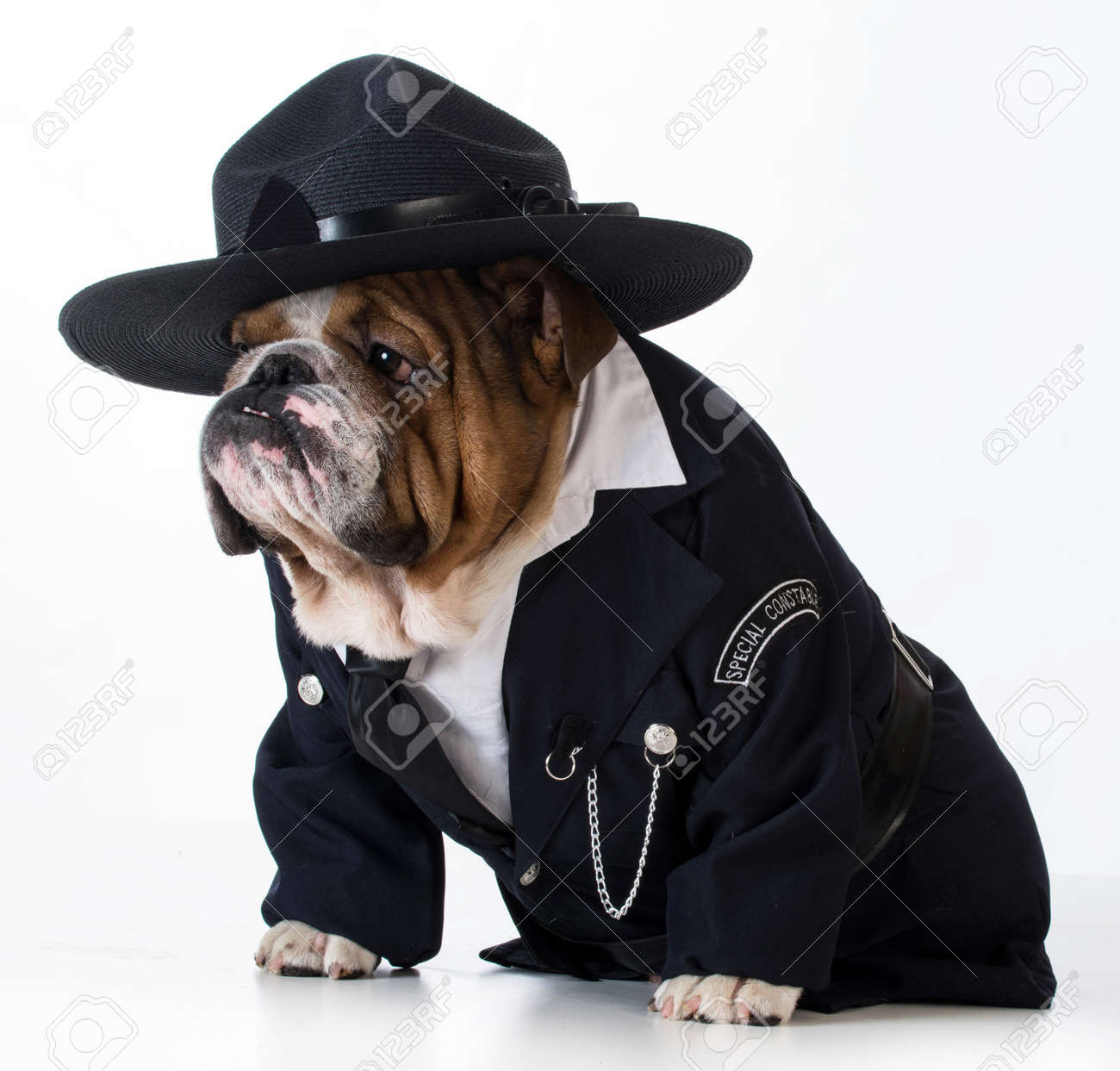 police officer or dog catcher - english bulldog wearing costume