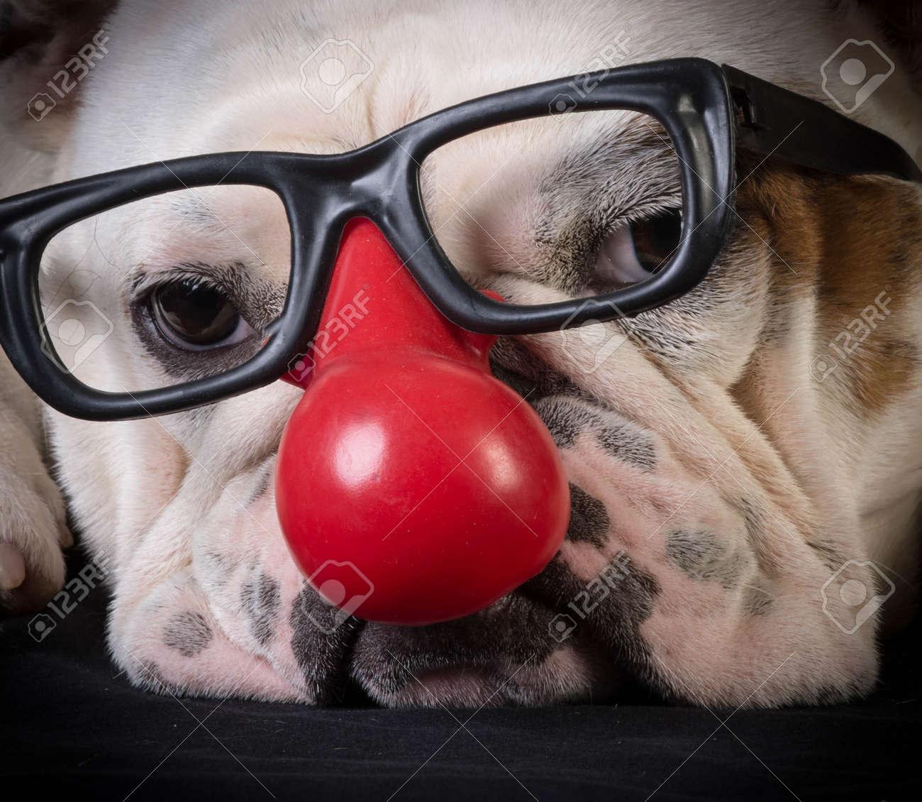 El juego de las palabras encadenadas-https://previews.123rf.com/images/cole123rf/cole123rf1507/cole123rf150700065/43061372-divertida-del-perro-bulldog-con-gafas-y-nariz-roja-de-payaso-Foto-de-archivo.jpg