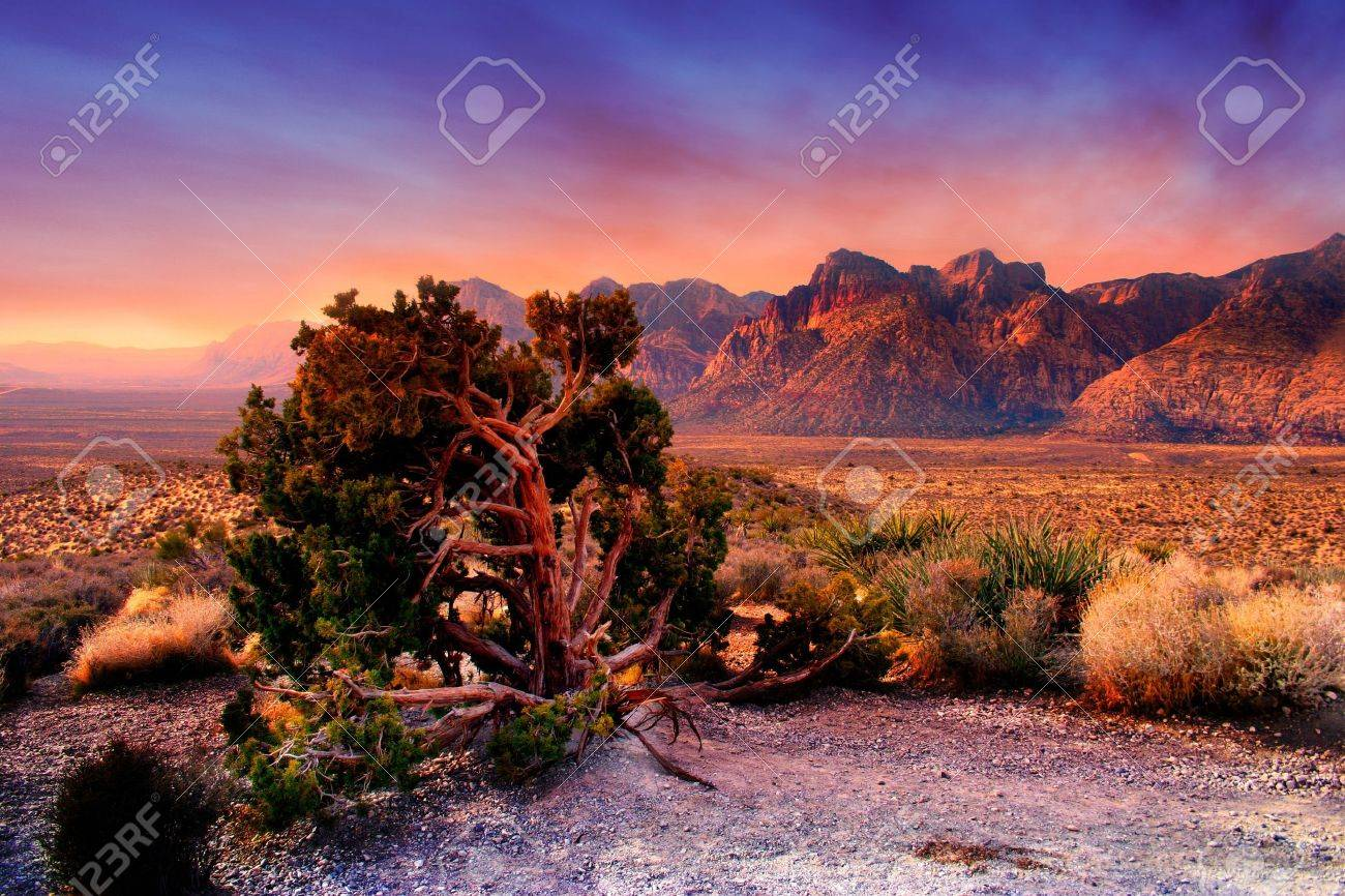 The Red Rock Canyon National Conservation Area is located just a few miles west of Las Vegas and encompasses 197,000 acres within the Mojave Desert.� Red Rock is an� area of world wide geologic interest and beauty.�The most significant geologic feature of Stock Photo - 622633