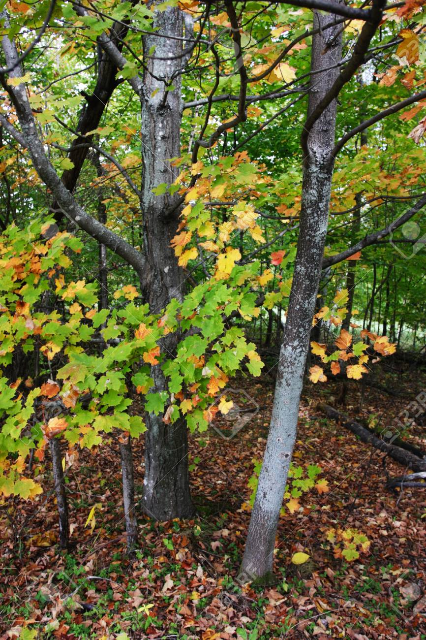 Fall Foliage At Vermont, USA Stock Photo, Picture And Royalty Free ...