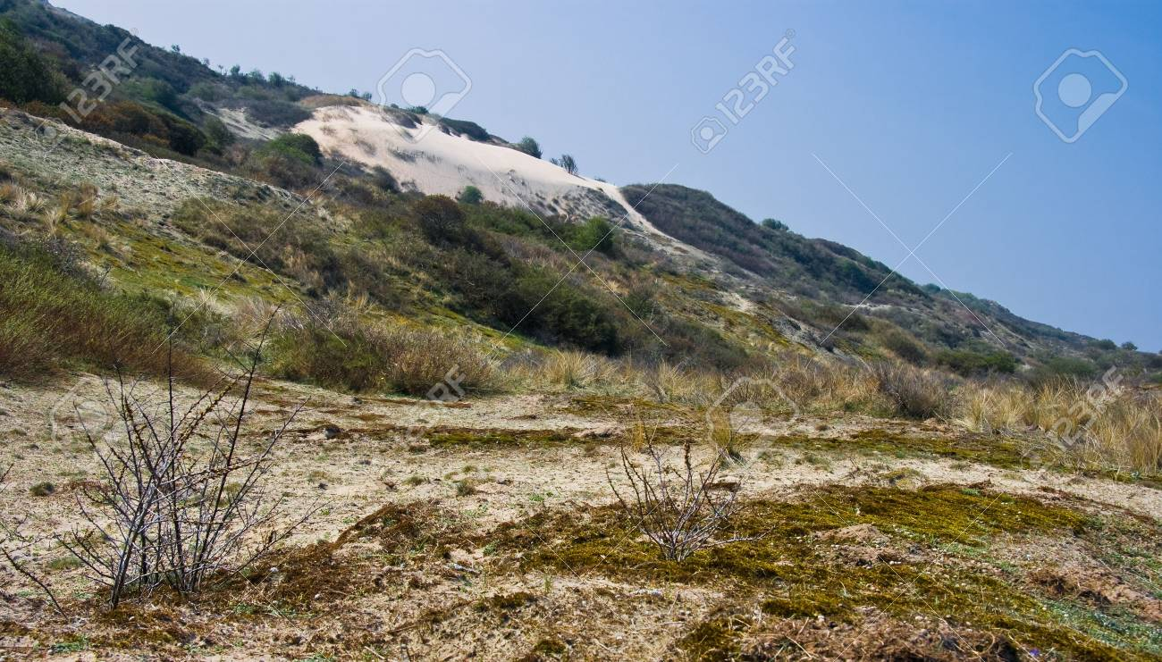 Landscape with sanddunes at the coast in april sun Stock Photo - 4694467