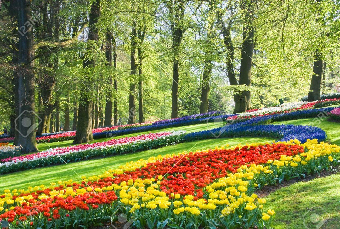 Colorful Spring Flowers Under The Beech Trees In The Park Stock ...